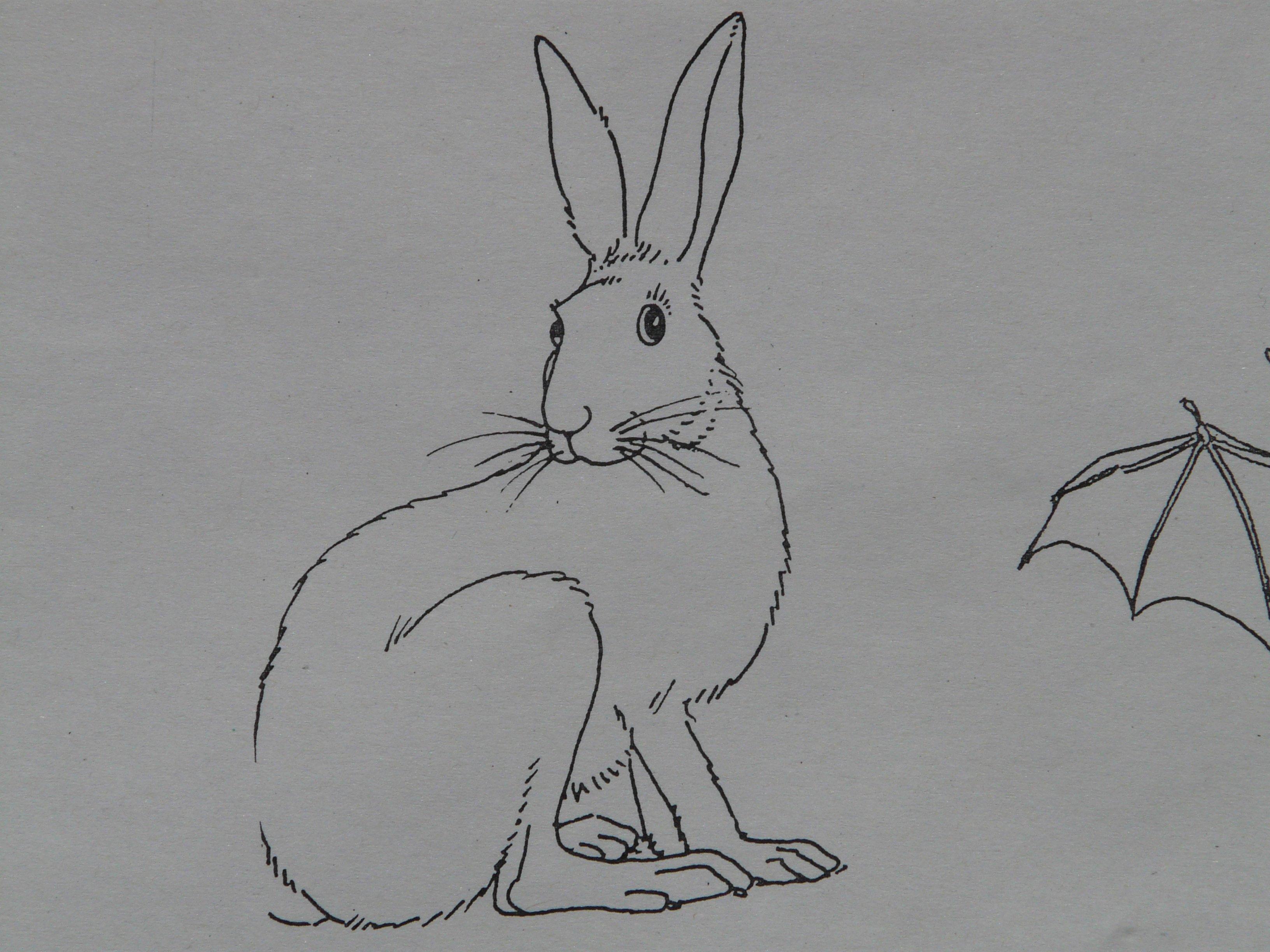 Gambar Hewan Cat Sketsa Gambar Ilustrasi Seri Membayangkan