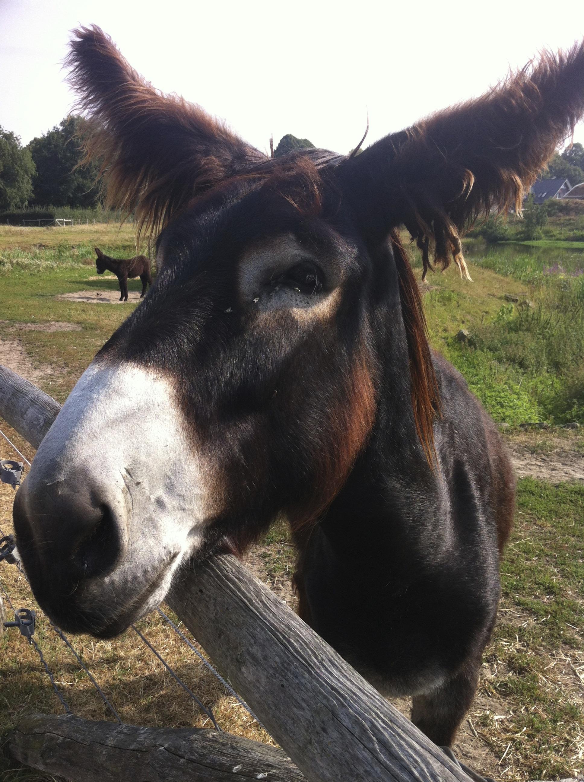 Immagini belle animale pascolo stallone criniera for Asino e cavalla