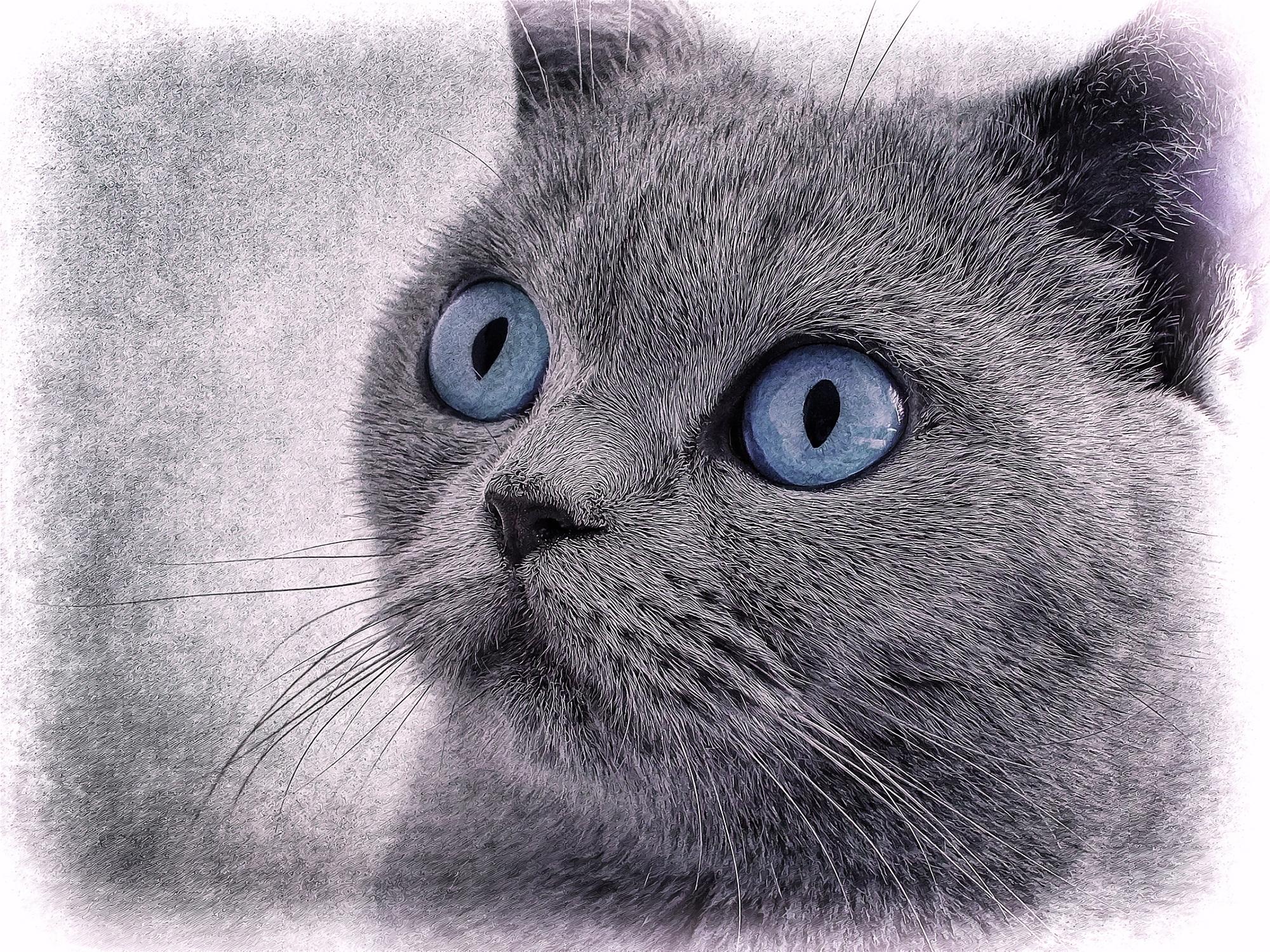 Gambar Hewan Membelai Binatang Menyusui Mata Biru