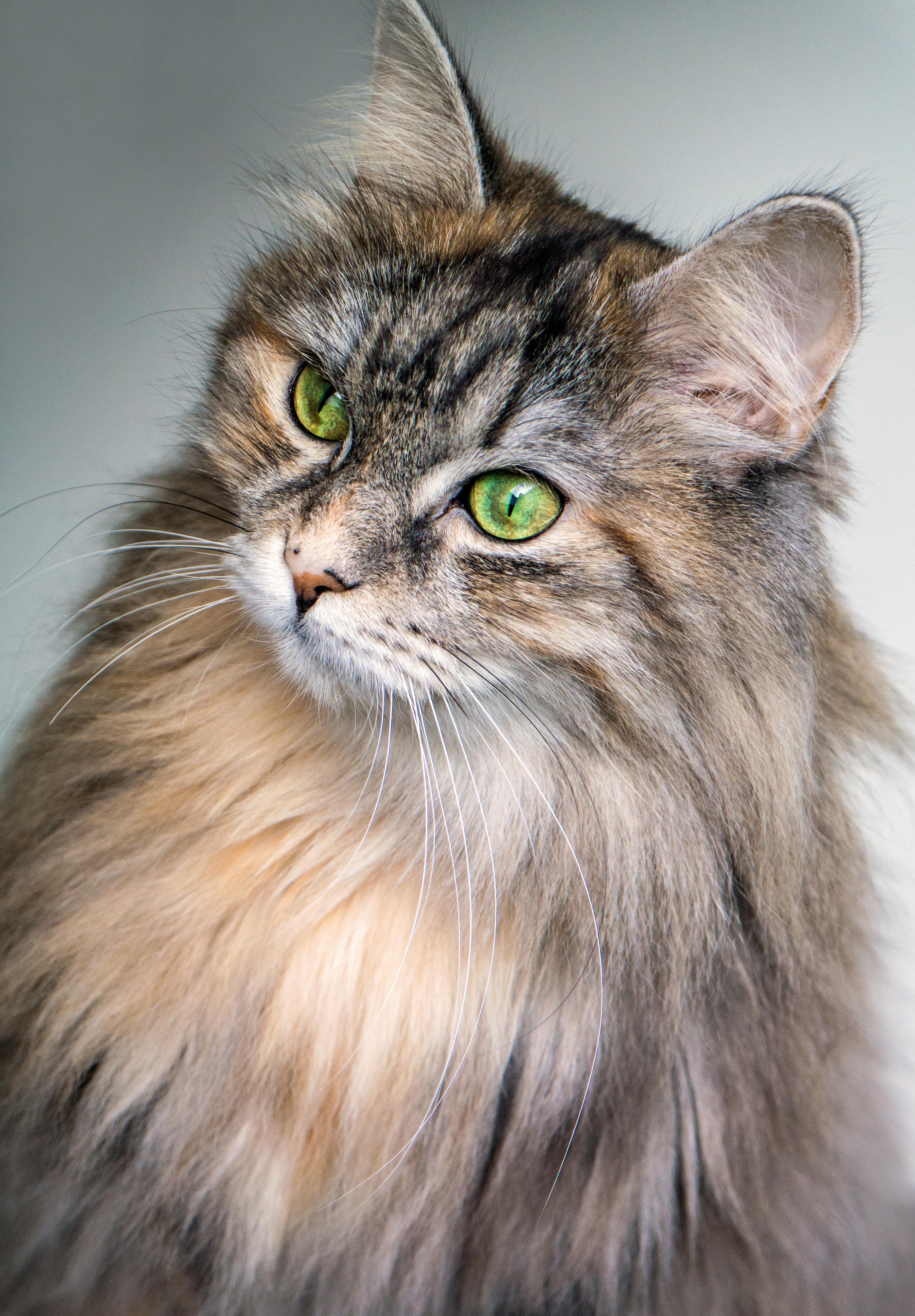 Free Images Animal Pet Whisker Fauna Whiskers Eye