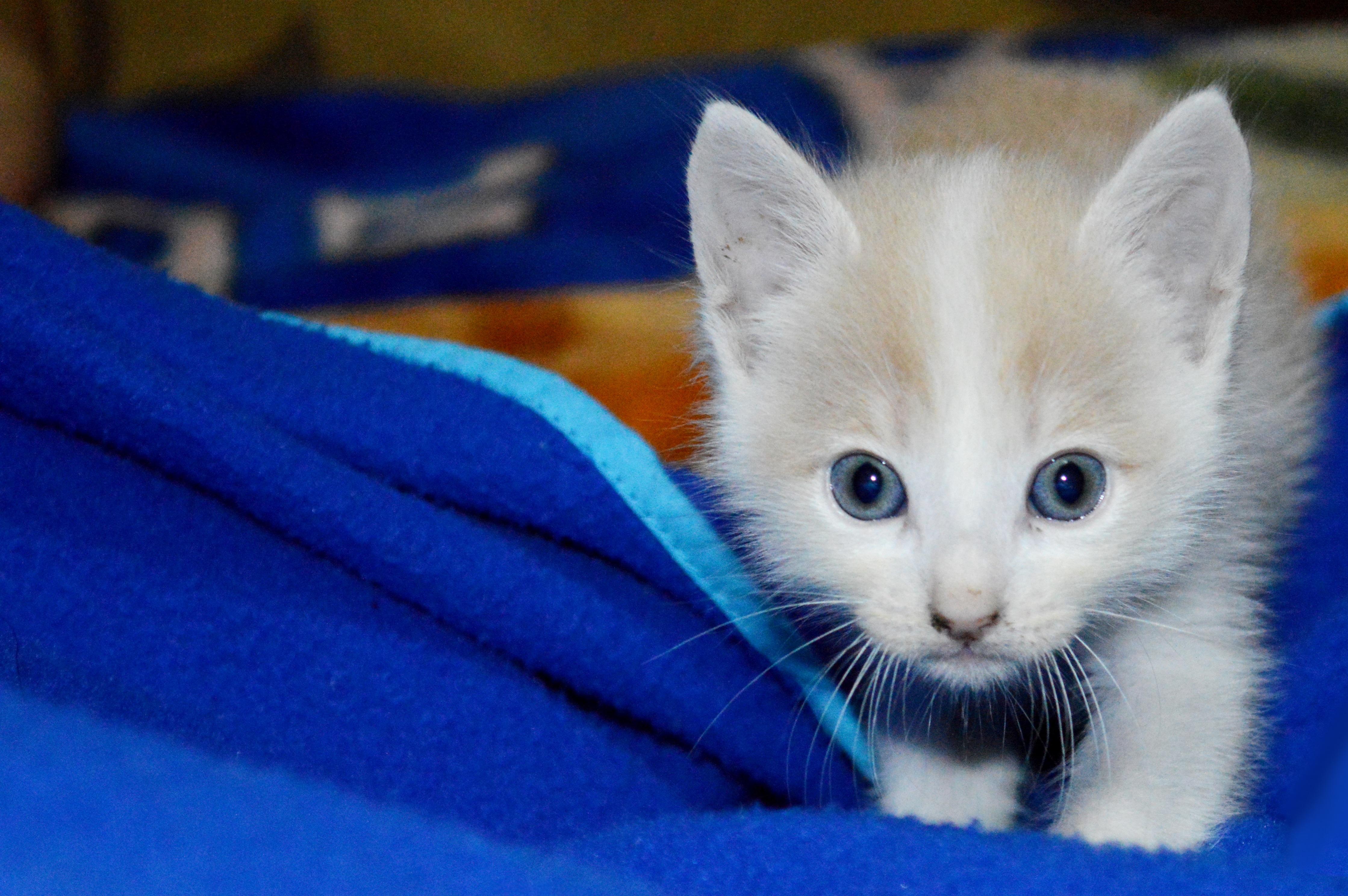 Gambar : hewan, membelai, anak kucing, licik, binatang ...