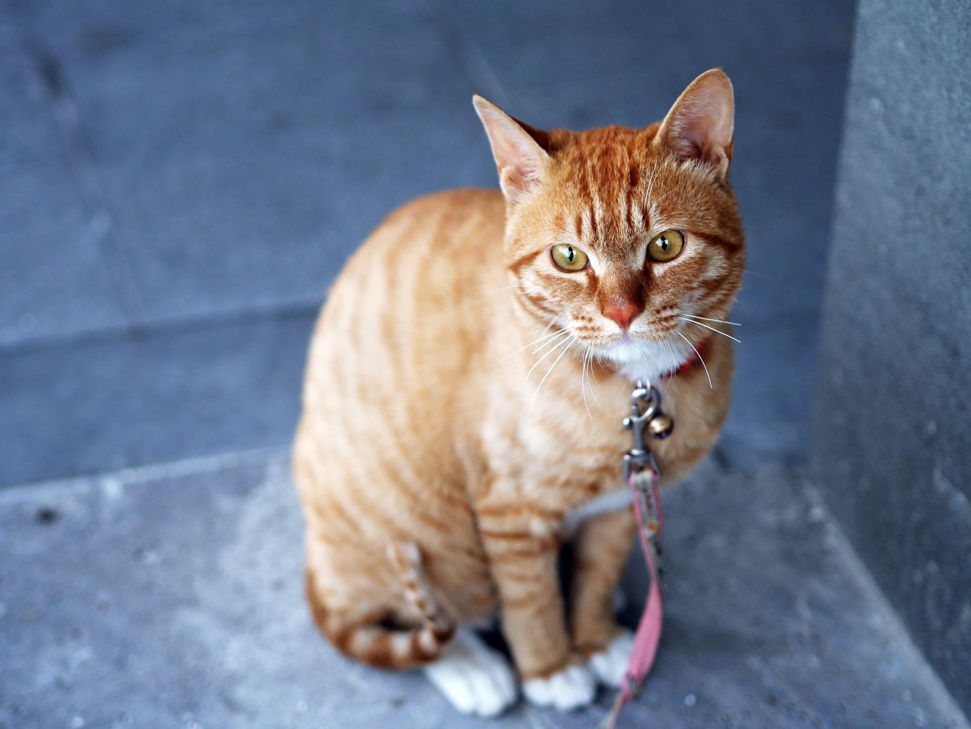 spray to get rid of cat dander