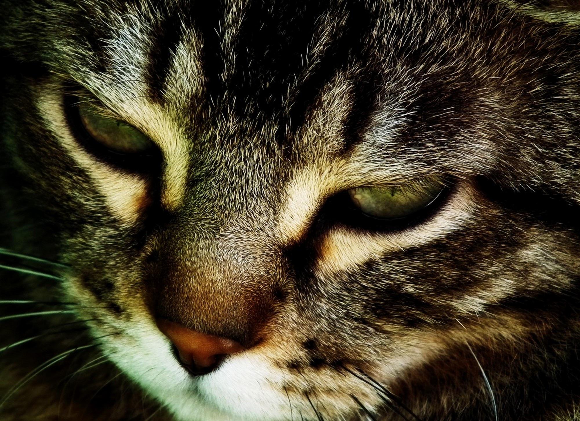 horúce mačička obrázok