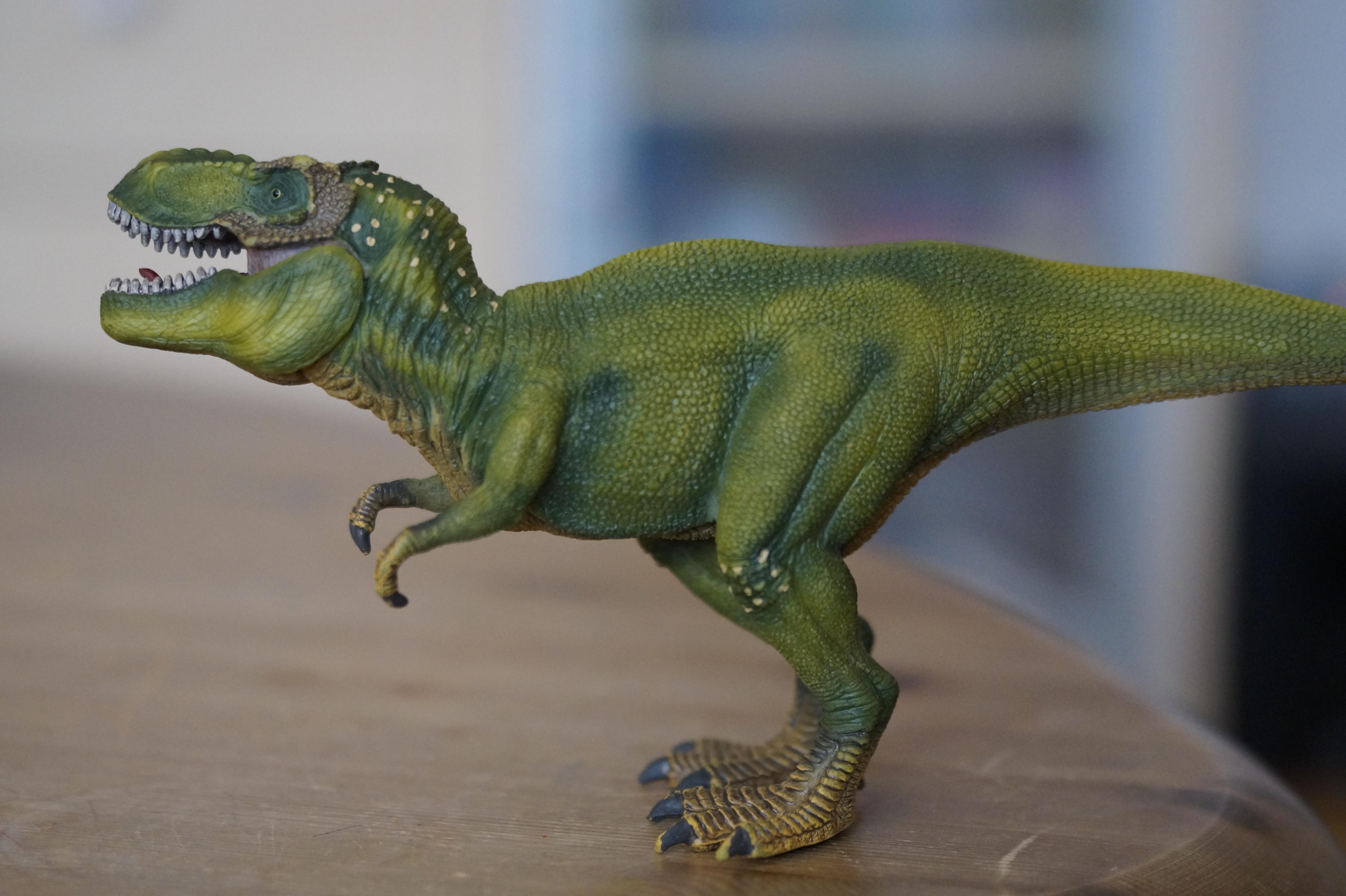 Bildet Dyr Rovdyret Reptil Fauna Tyrannosaurus Rex Barn