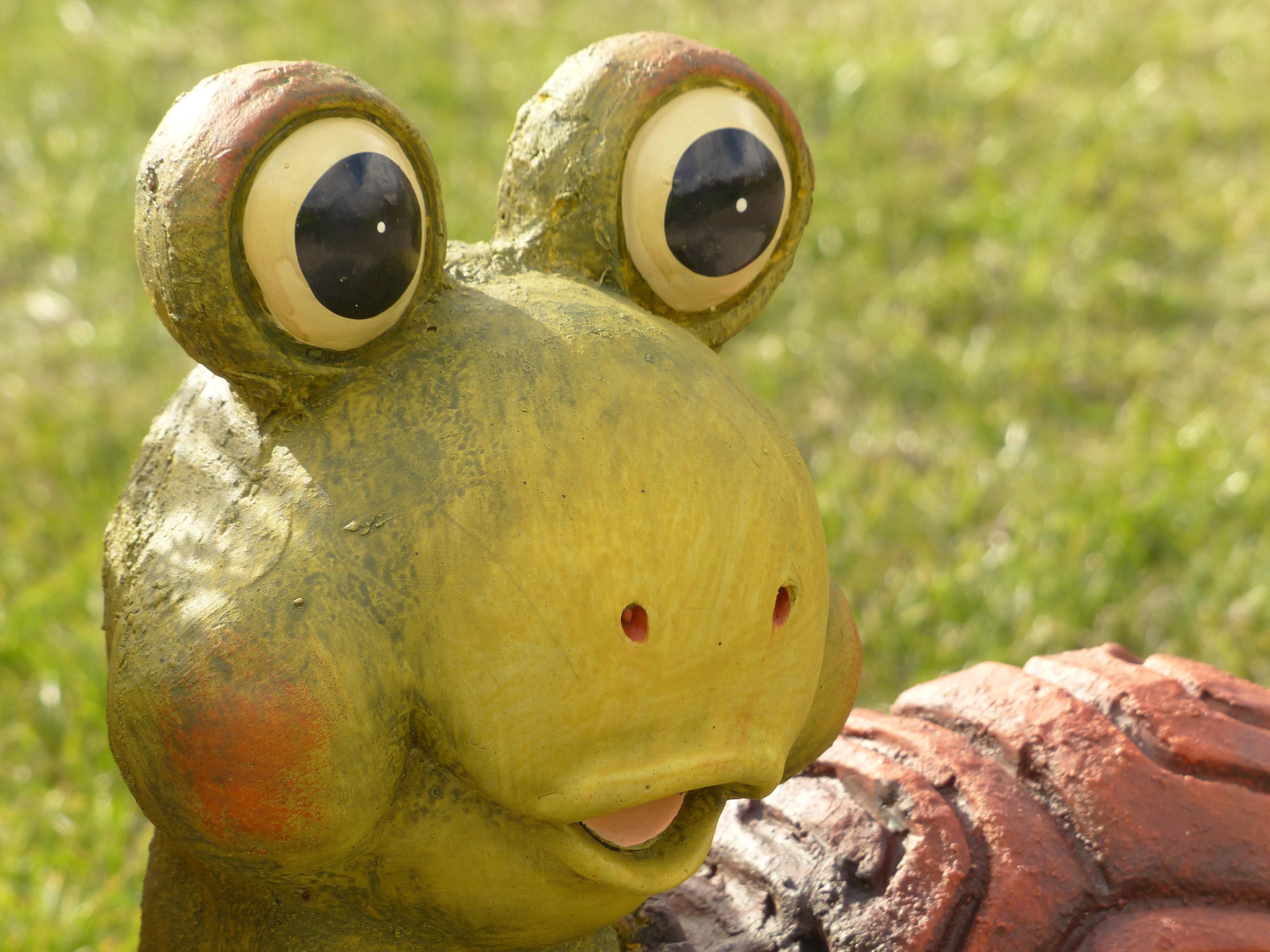 Animal Wildlife Decoration Ceramic Turtle Frog Amphibian Garden Pottery  Fauna Close Up Eyes Figure Look Macro