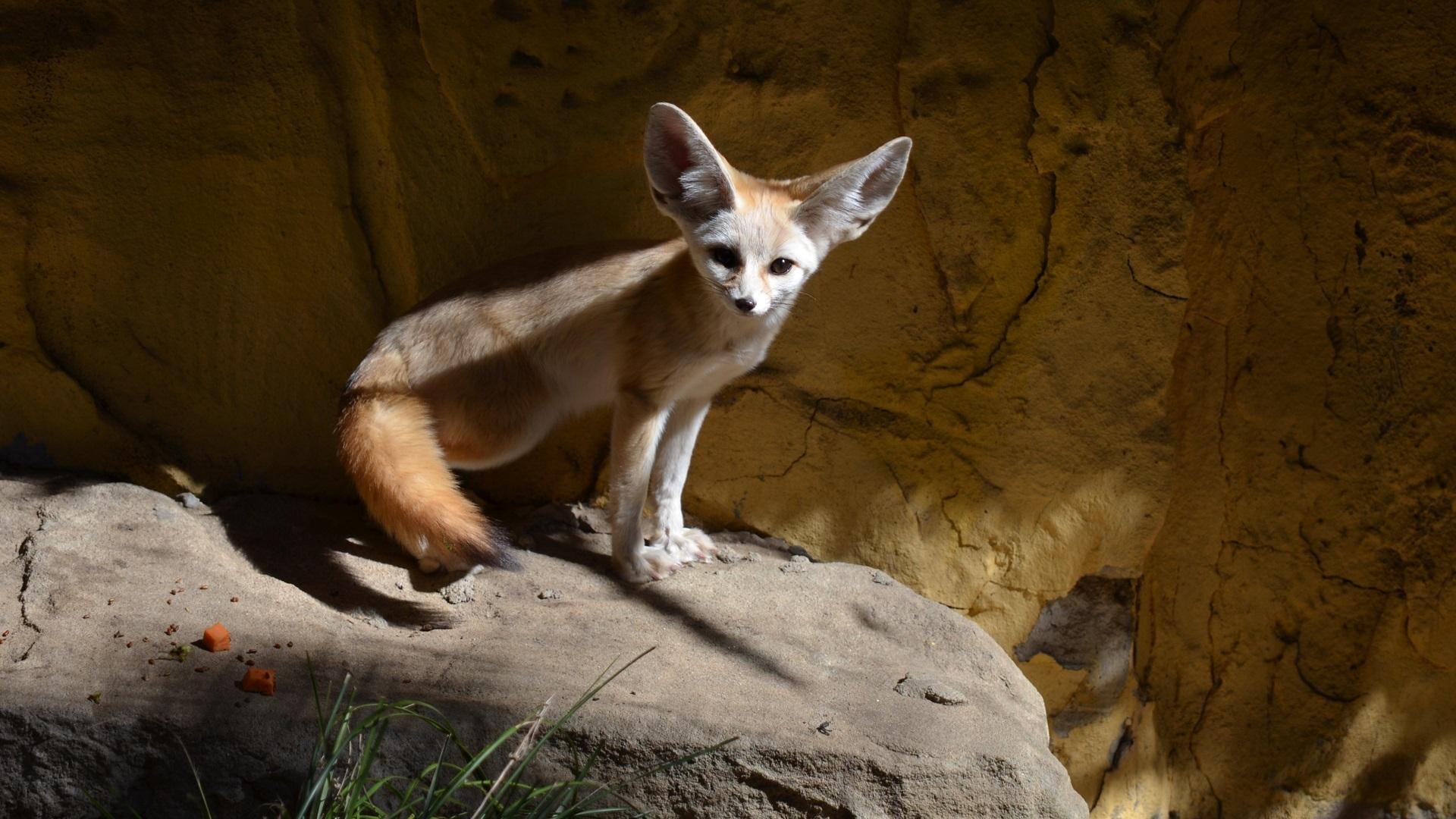 Fotos Gratis Animal Fauna Silvestre Ambiente Zoo