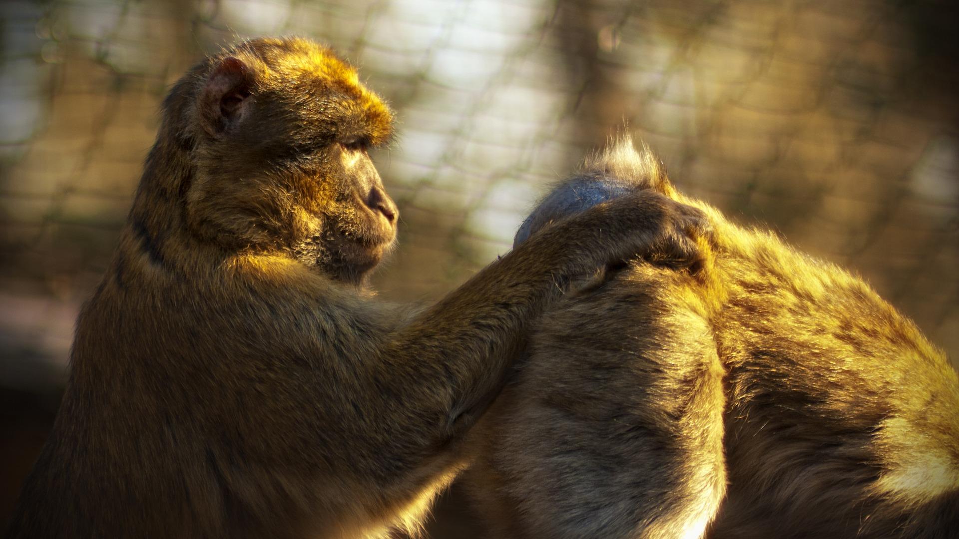 Images gratuites animal faune sauvage zoo se soucier - Photos de lions gratuites ...