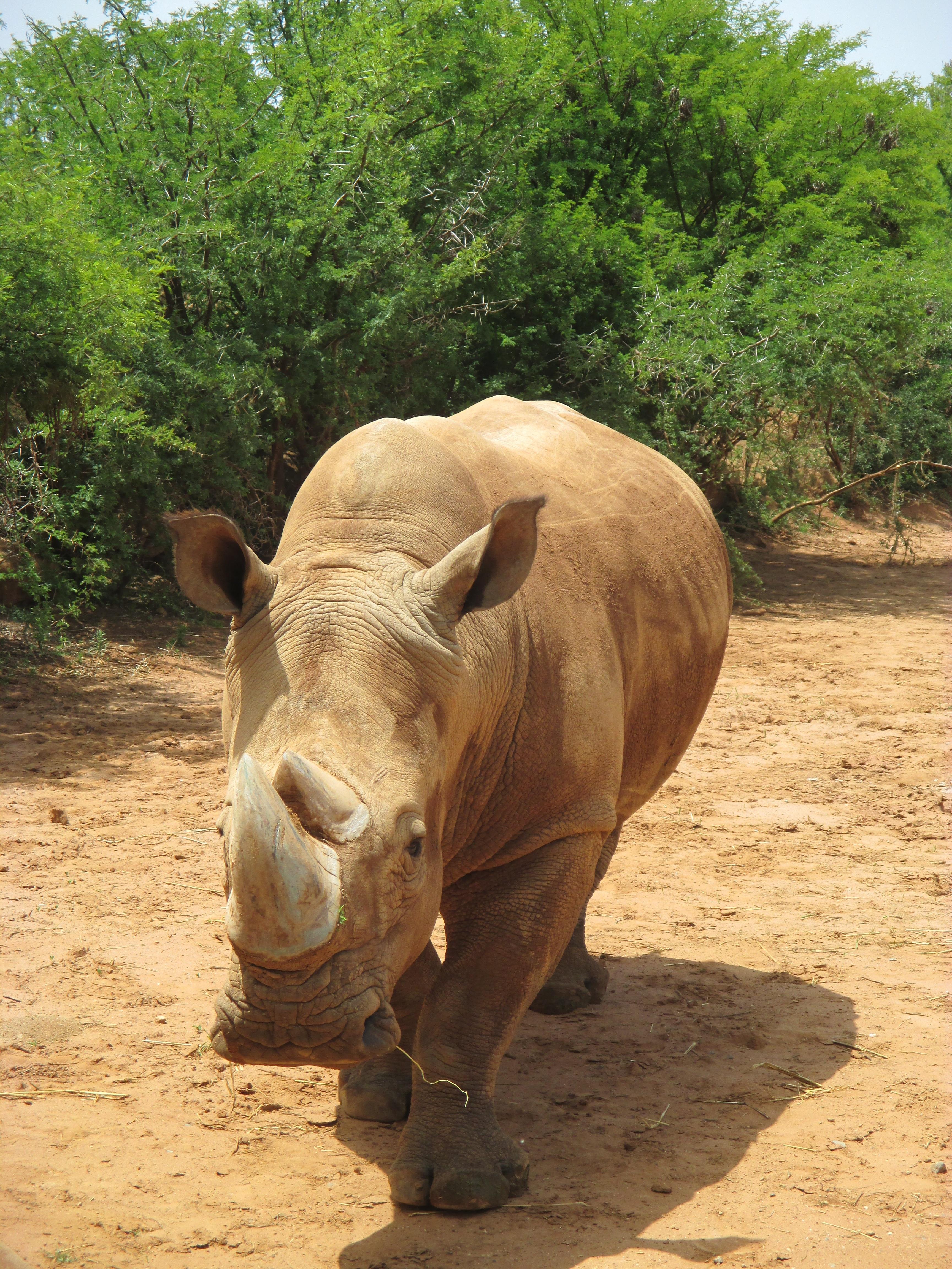 free images : animal, wildlife, zoo, africa, park, fauna, savanna