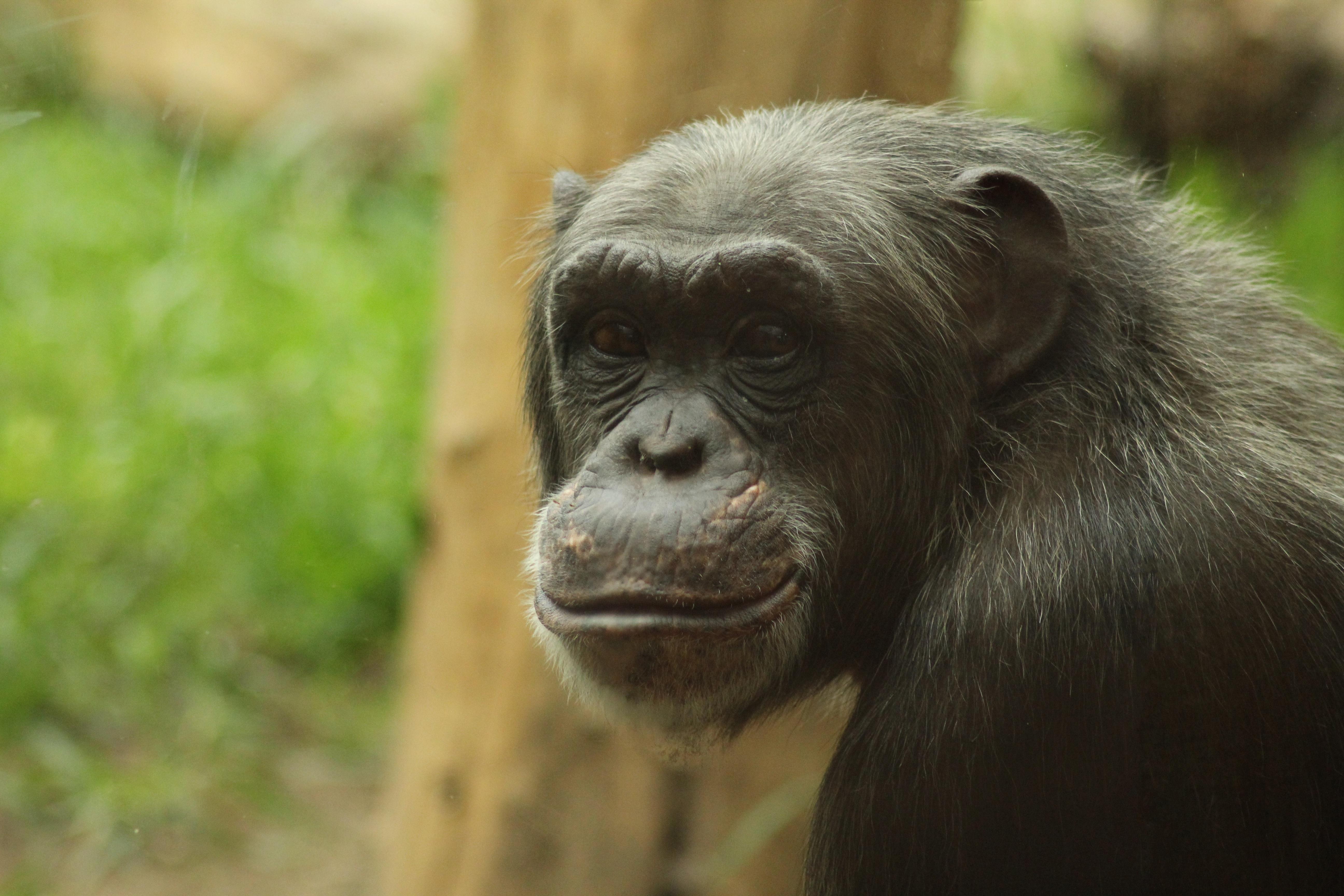 gambar : hewan, margasatwa, kebun binatang, binatang menyusui