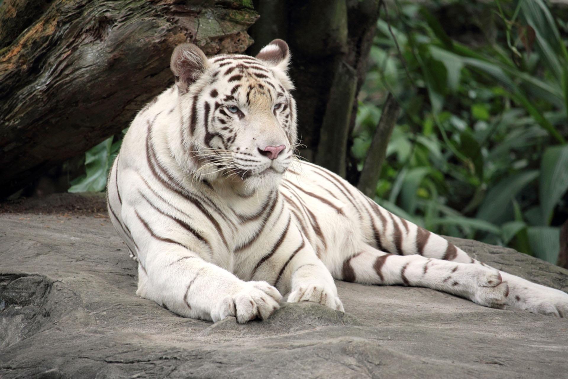 Gambar Hewan Margasatwa Kebun Binatang Binatang Menyusui