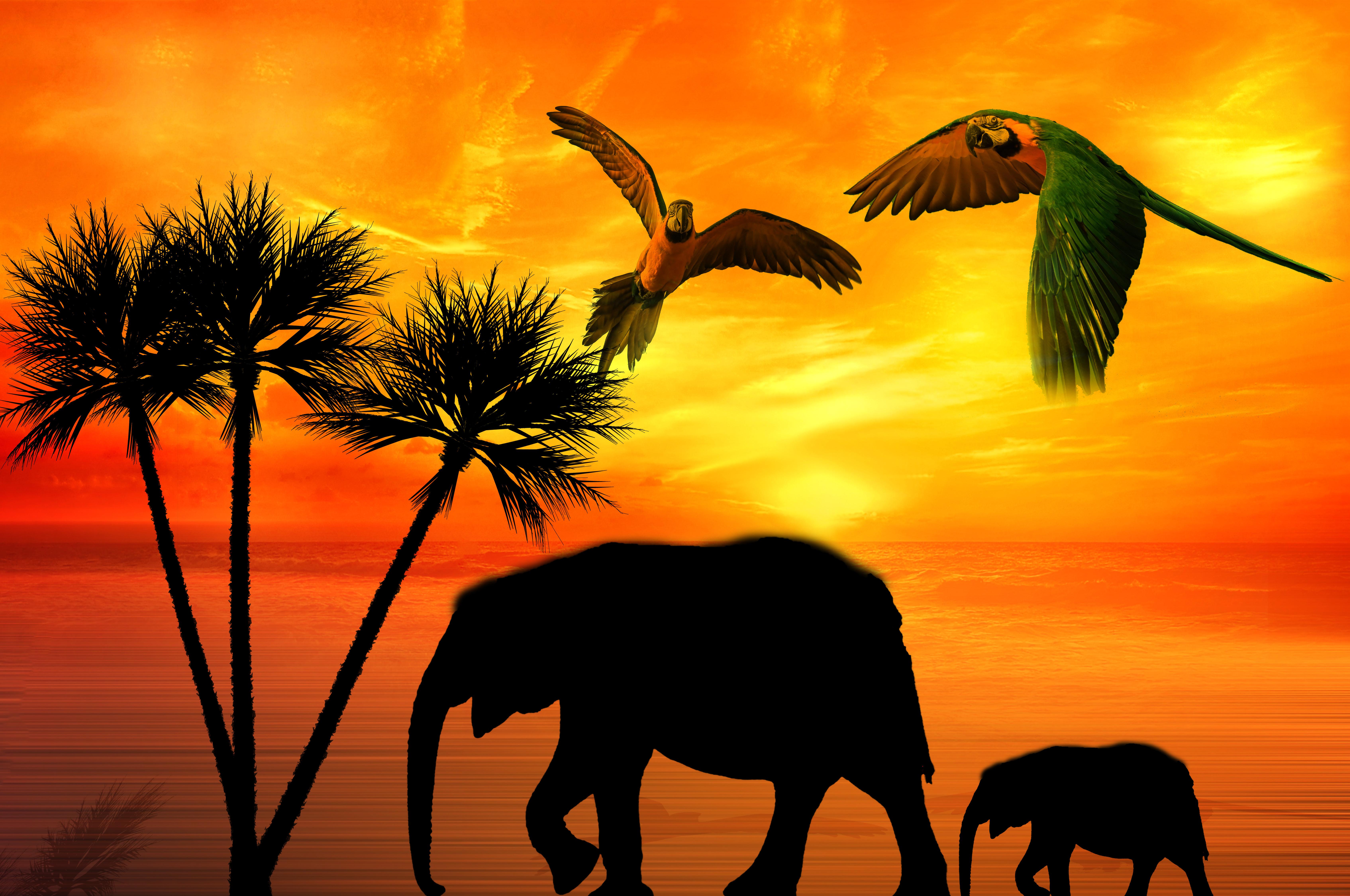 Free Images Animals Africa Palms Ara Parrot Bird