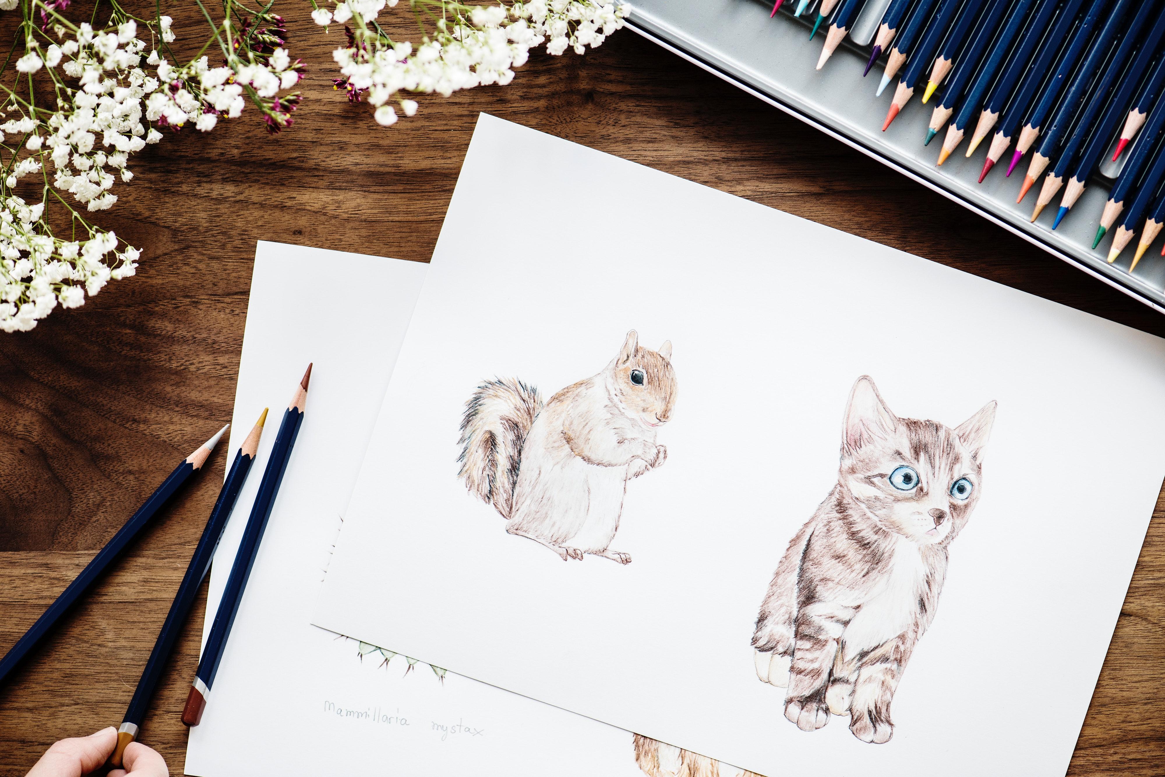 Fotograf Hayvanlar Sanat Parlak Kedi Renkli Kalemler Boyama