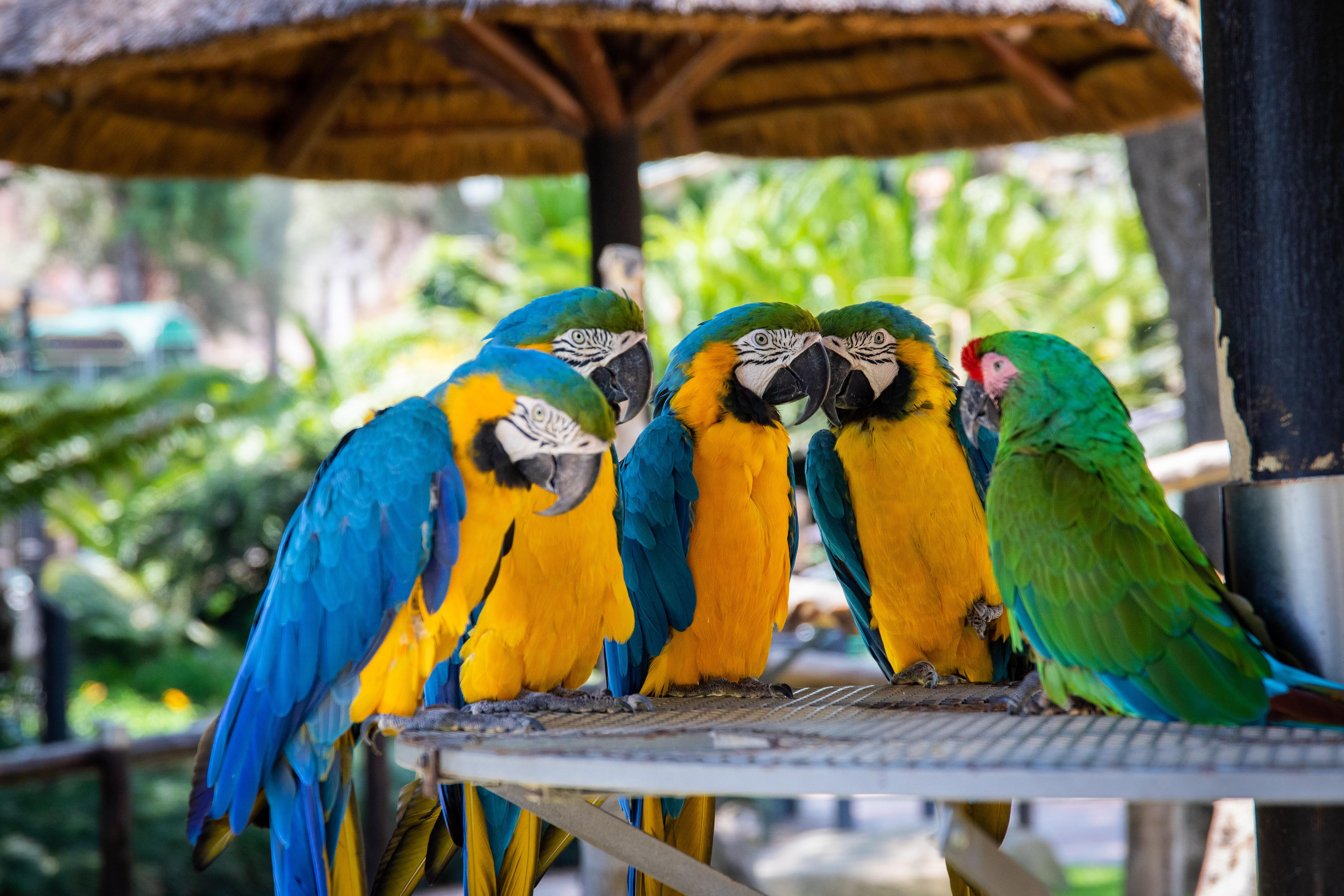 Free Images Animals Avian Aviary Beak Beautiful Birds Bright