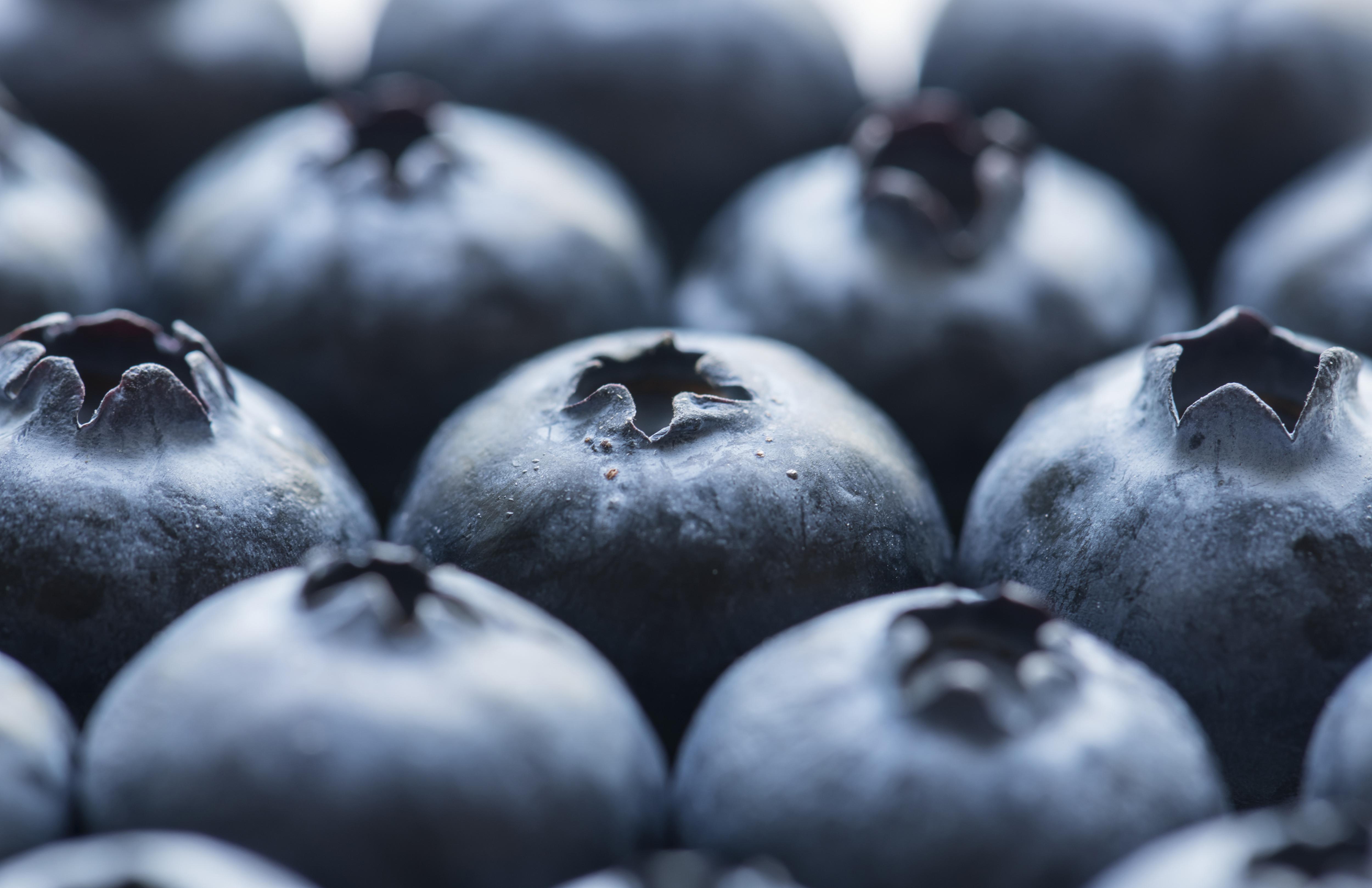 free images antioxidant, background, berry, blue, blueberryfree images antioxidant, background, berry, blue, blueberry, closeup, delicious, dessert, detox, diet, energy, food, fresh, freshness, fruit, healthy,