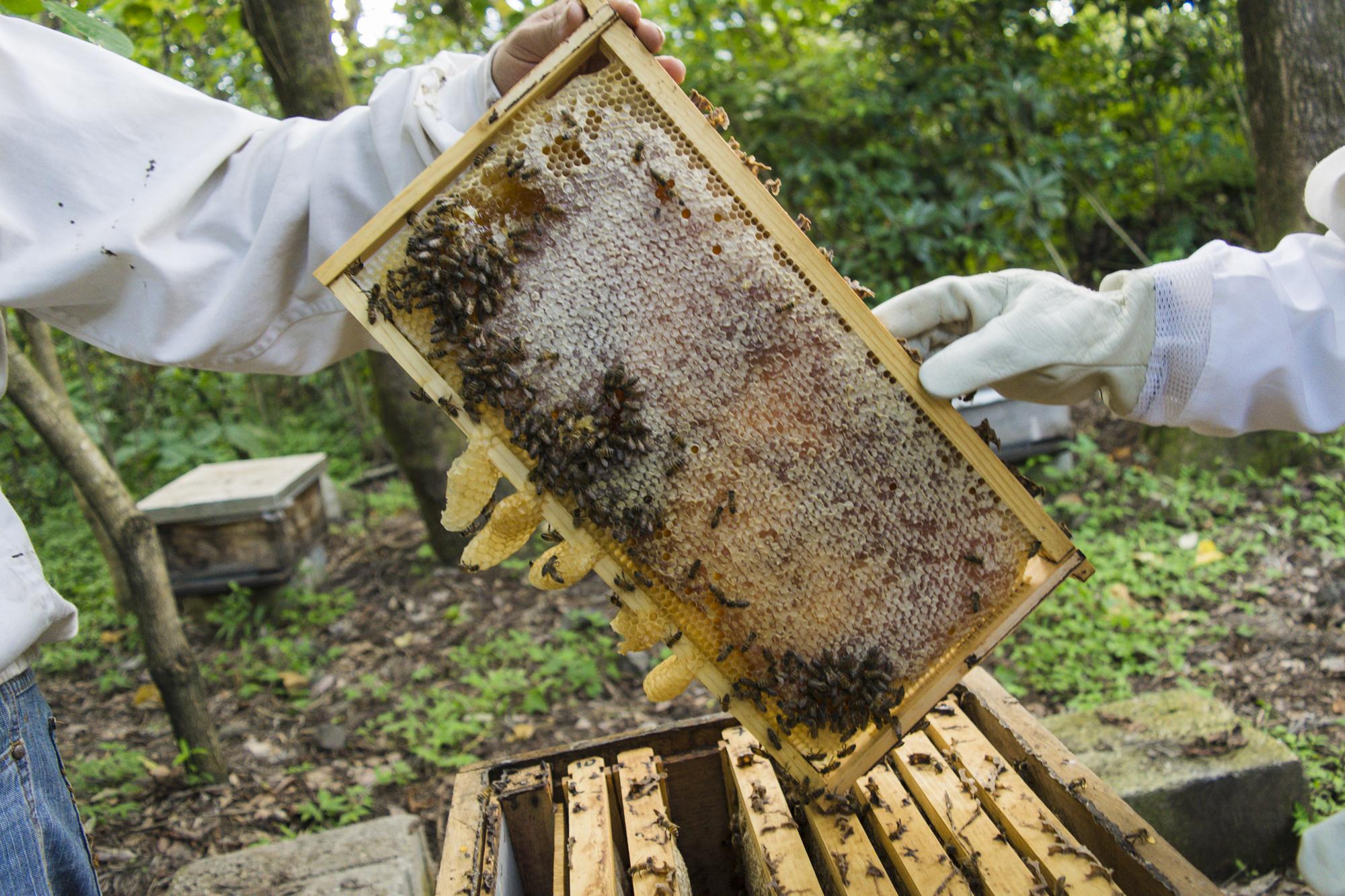 Картинки улей с пчелками