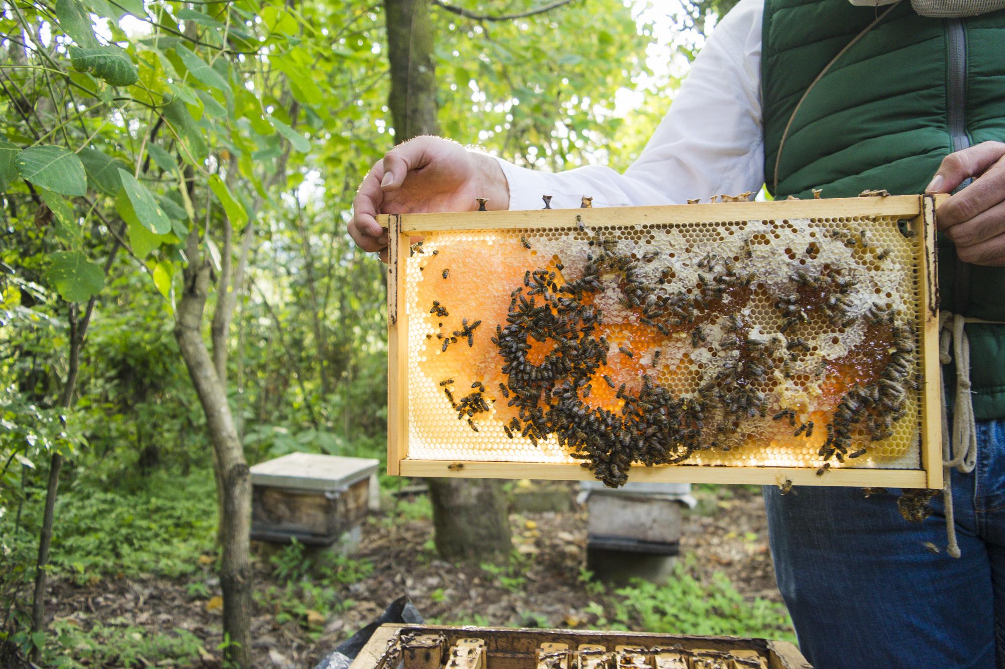 металл пчеловод улей пчелы картинки работе