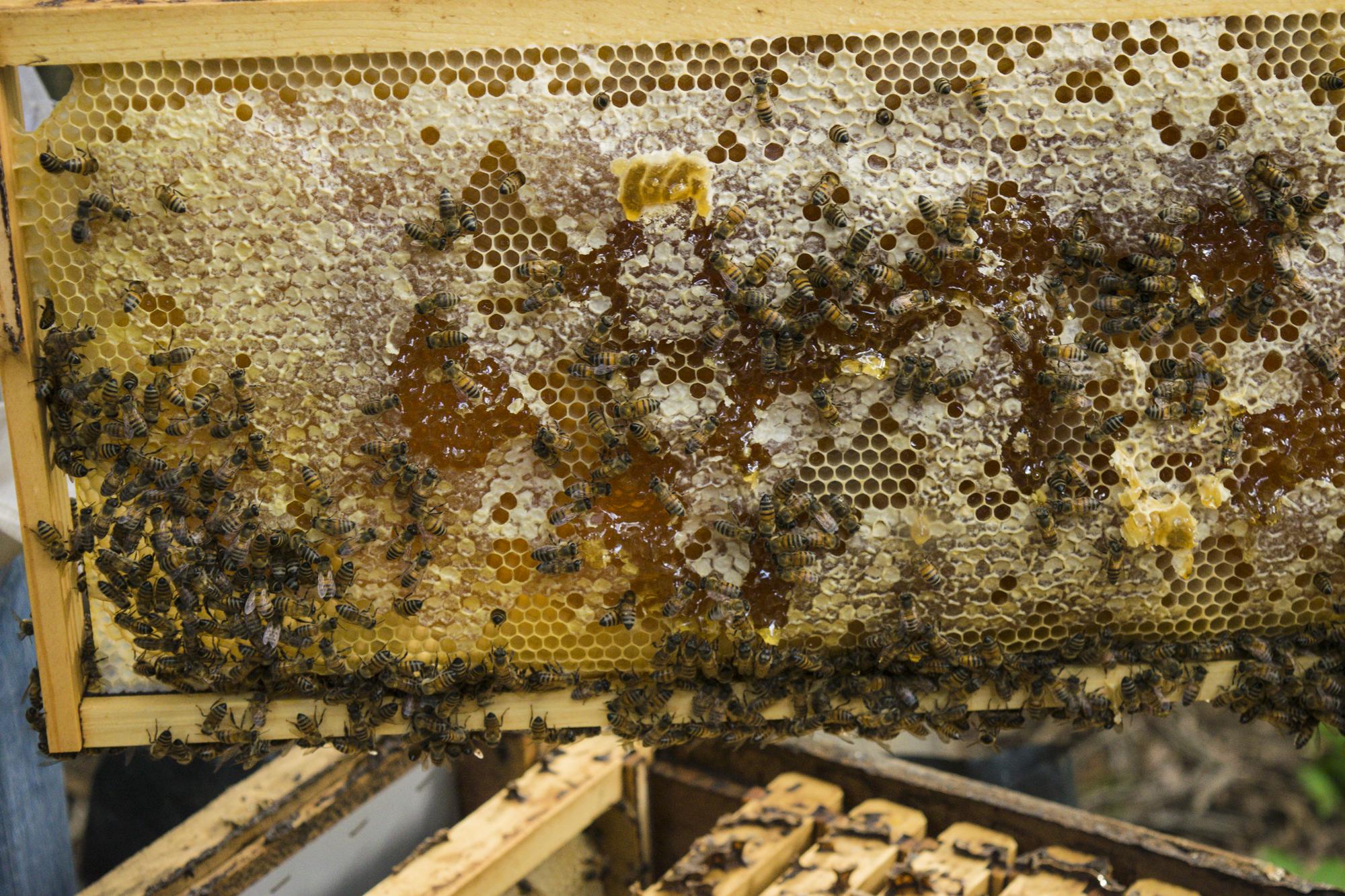 фотографиями пчеловод улей пчелы картинки перилах лестнице