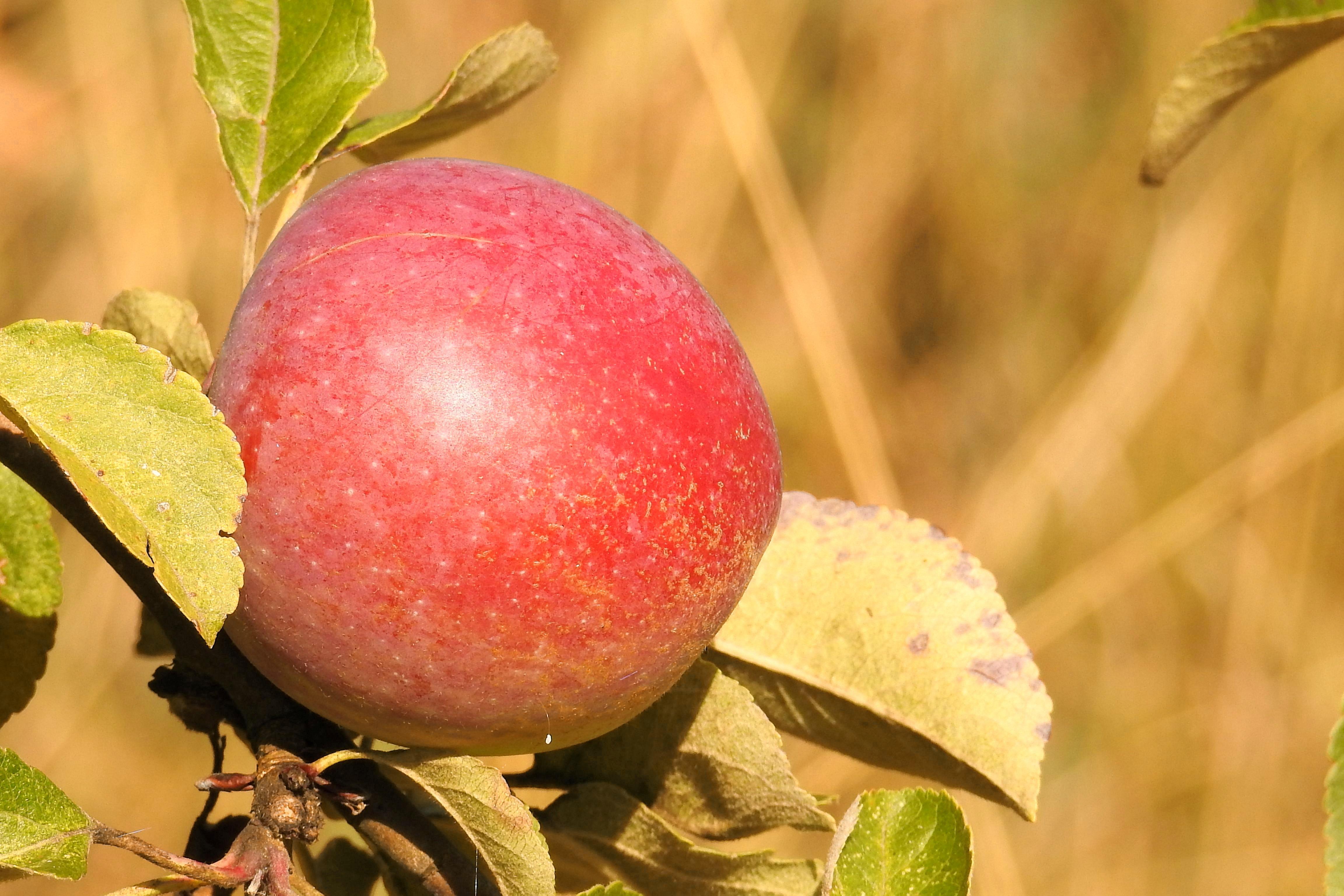 εφαρμογές μήλο σεξ