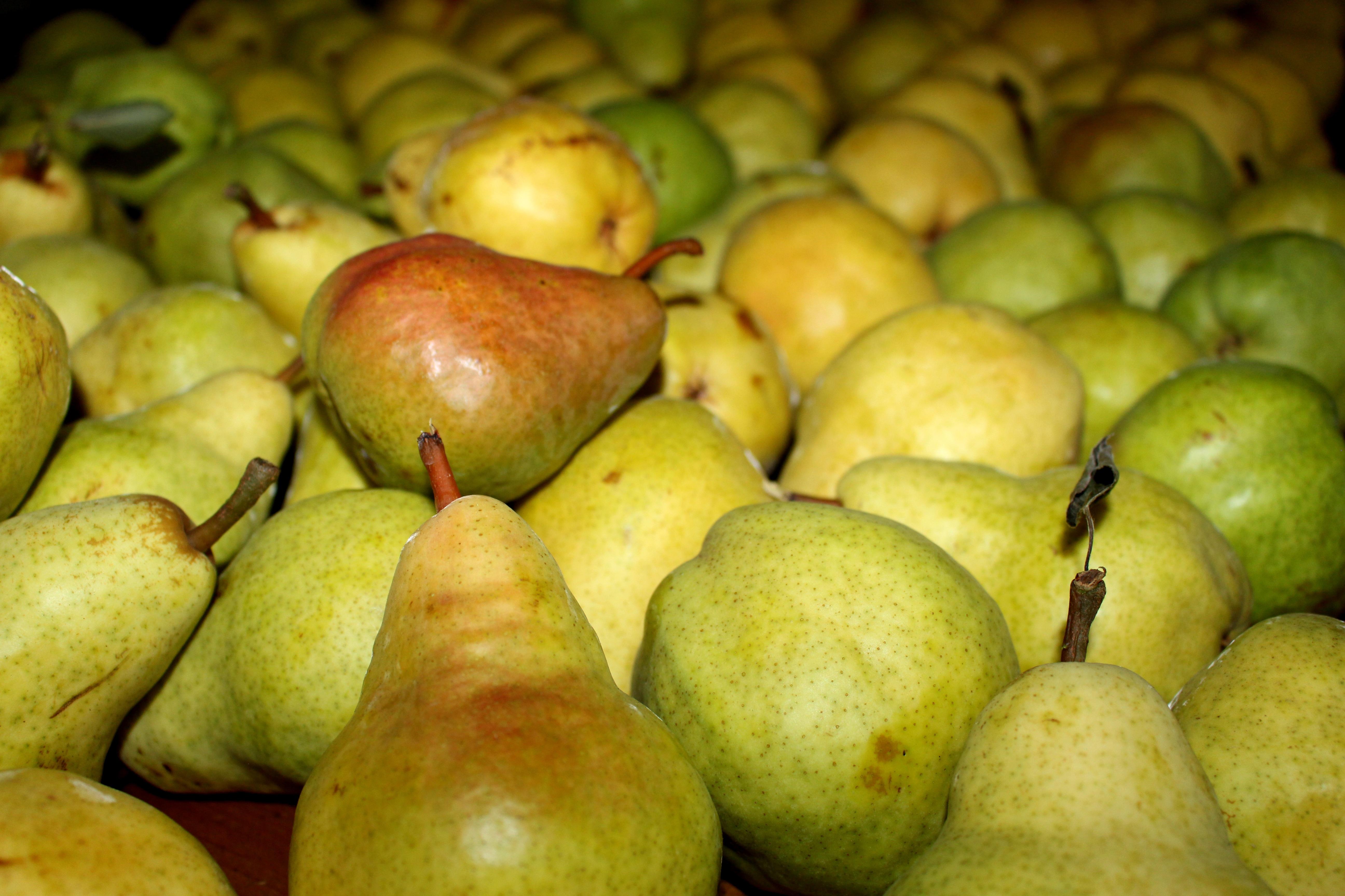 hình ảnh : táo, thiên nhiên, thực vật, trái cây, Vườn cây, mùa hè, món ăn, Mùa xuân, màu xanh lá, Sản xuất, tự nhiên, tươi, vườn, Lê, Phong phú, ...