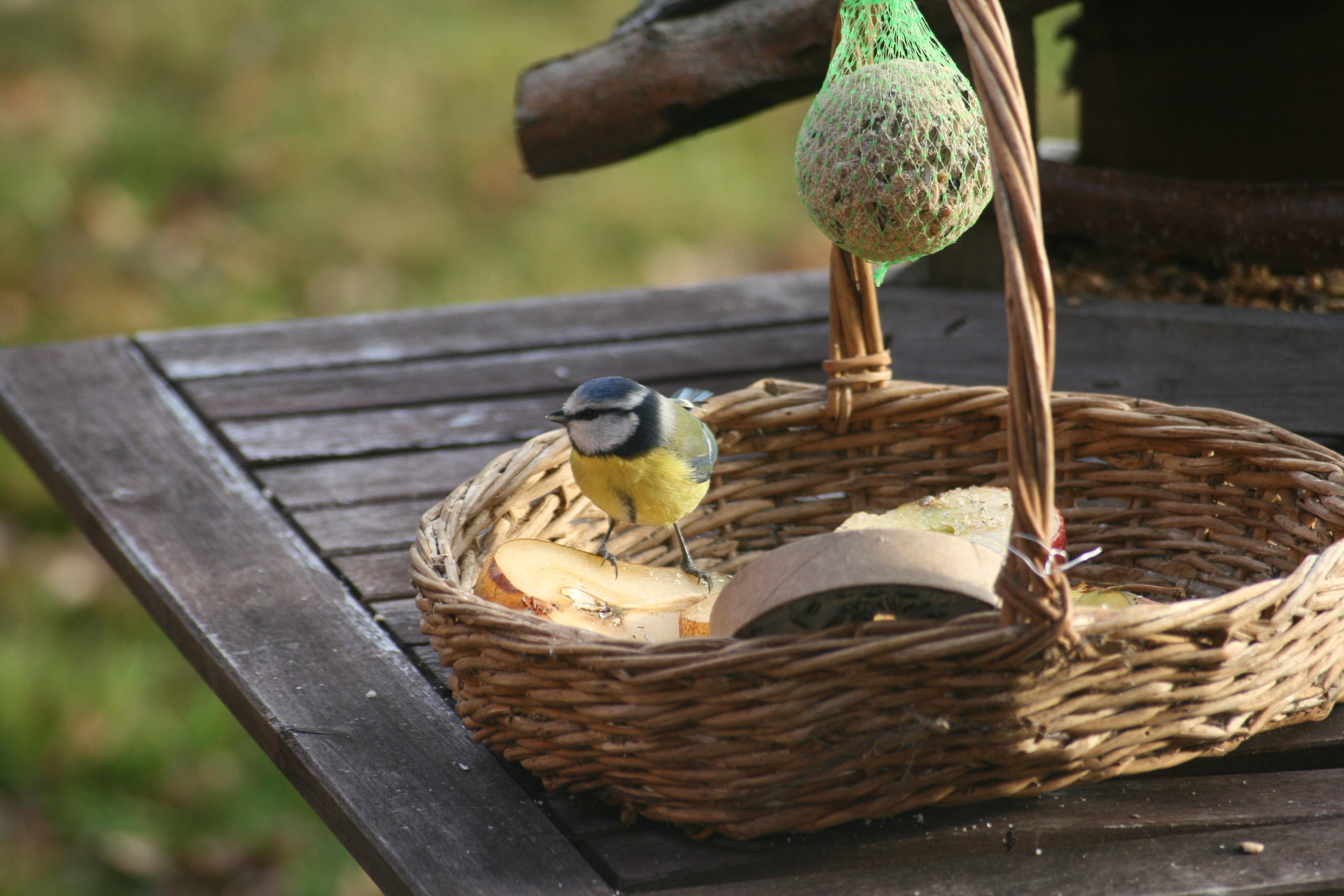 at feeder com shop treasures yellow lowes tube black steel garden bird pd