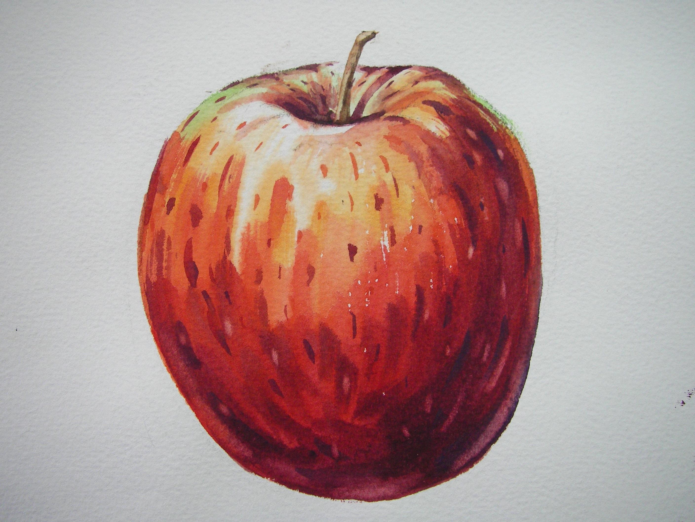 Fotos gratis : manzana, Fruta, flor, comida, rojo, Produce, vegetal ...