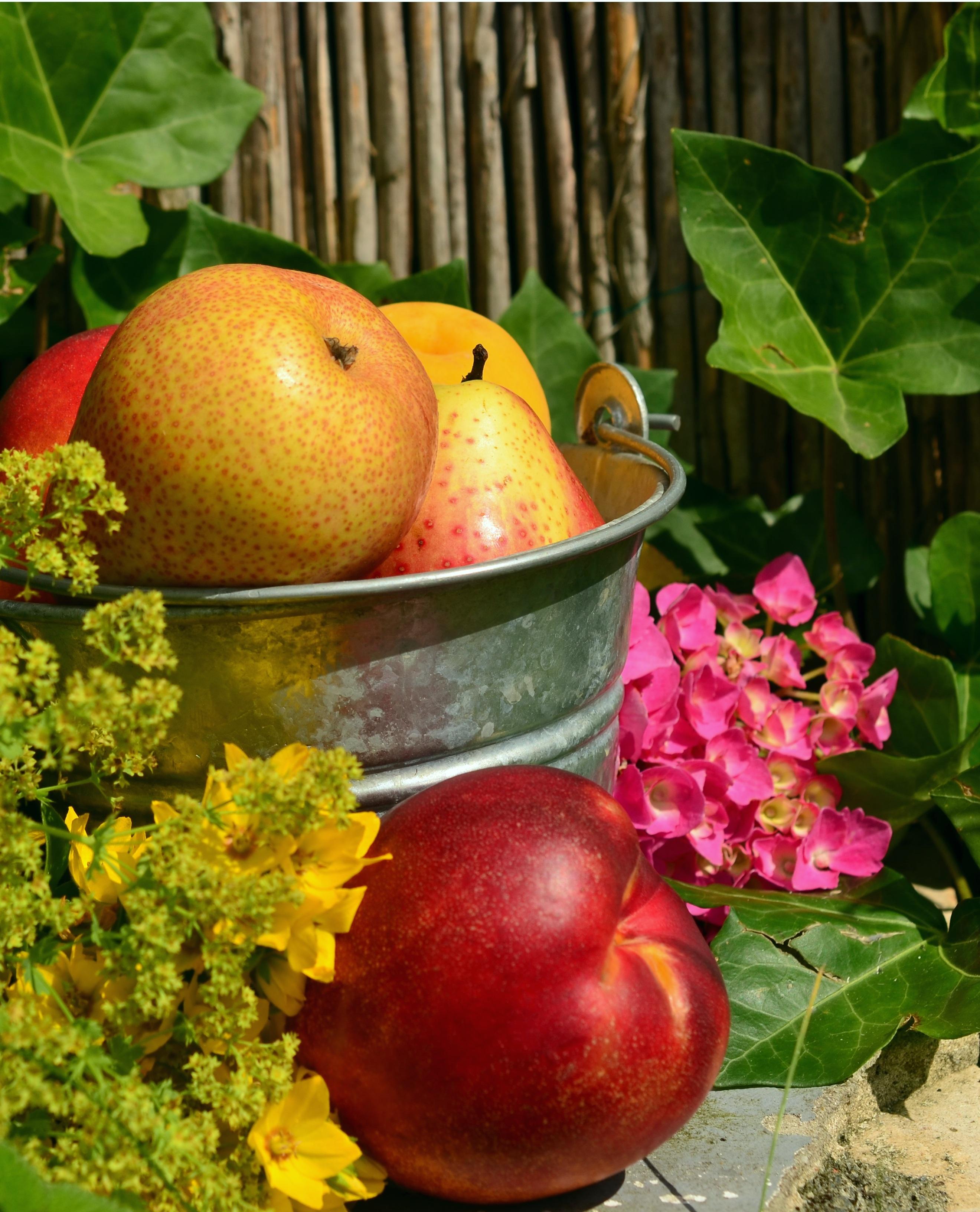 Kostenlose foto : Apfel, Frucht, Blume, Sommer-, Lebensmittel ...