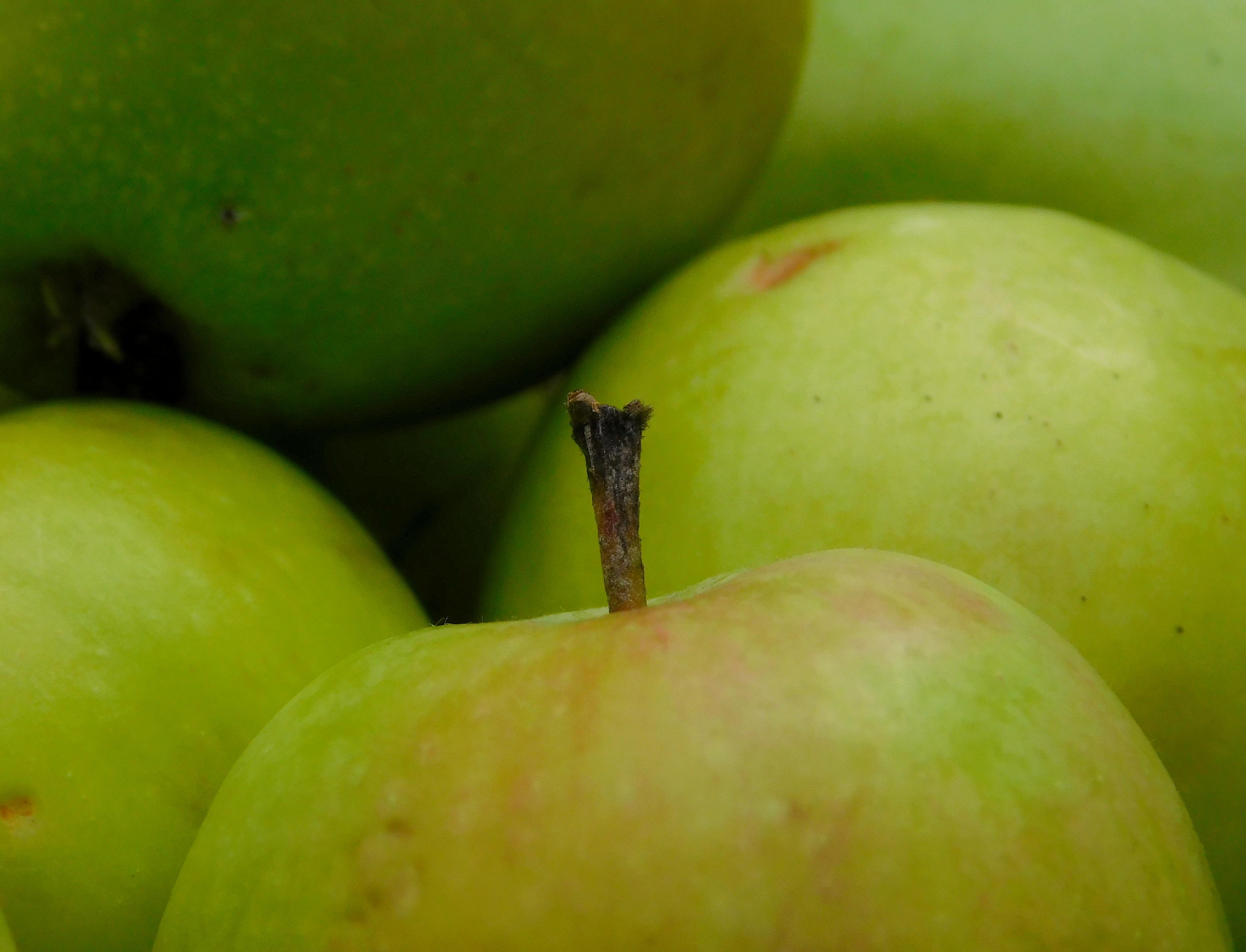 Кислые яблоки картинки