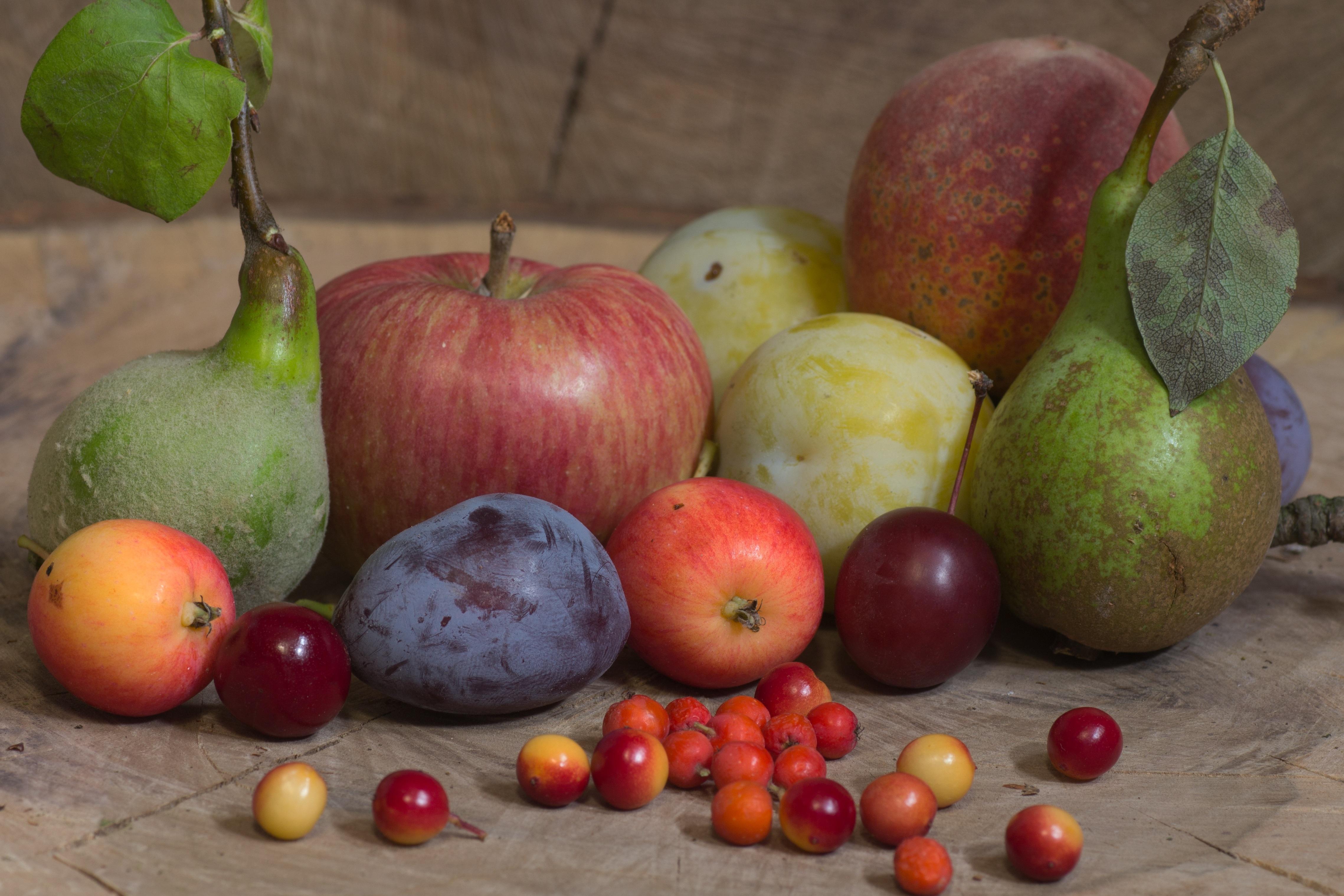 картинки фруктов из библии отличных идей, реатива