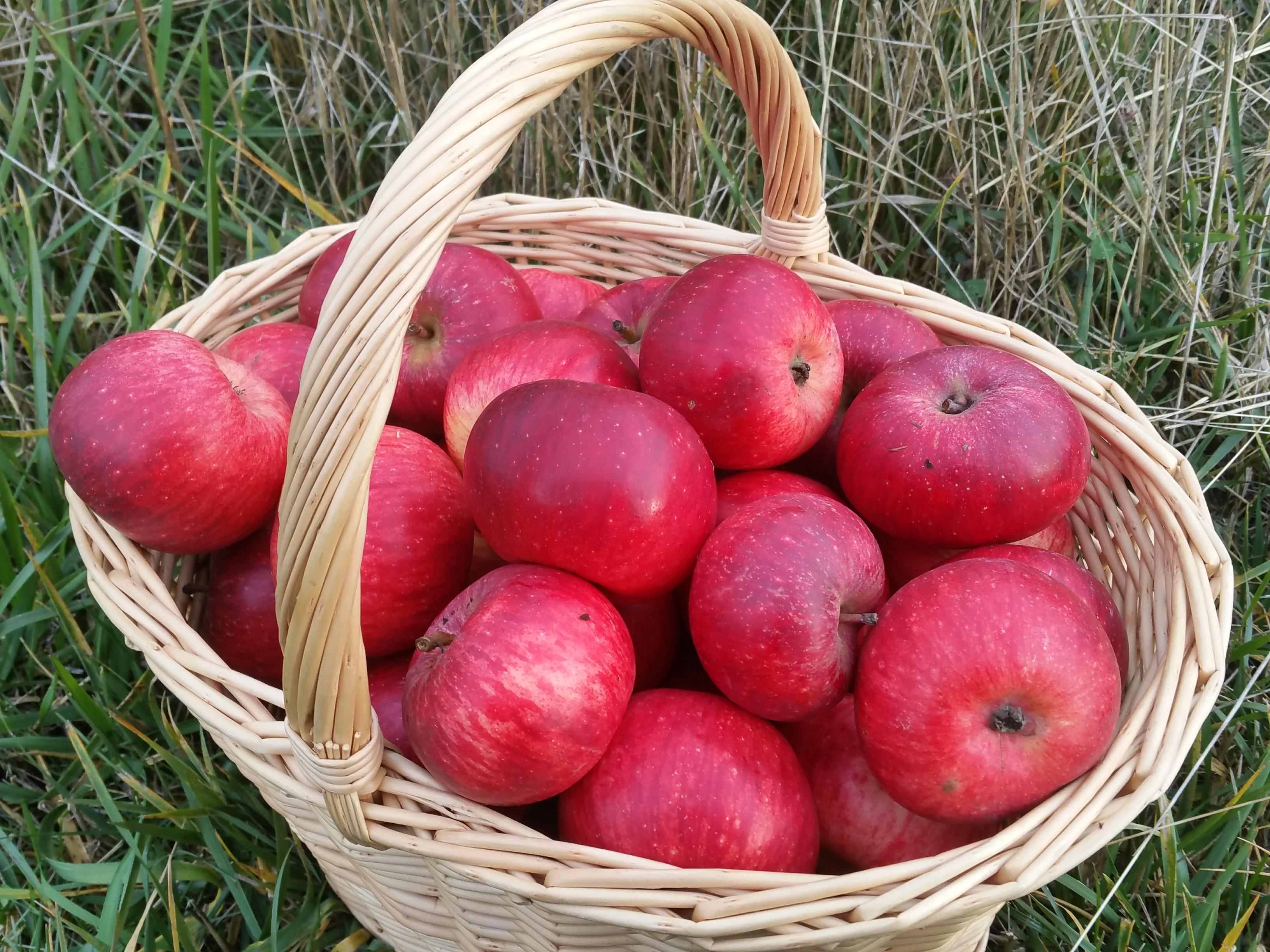 Фото с яблоками в корзине