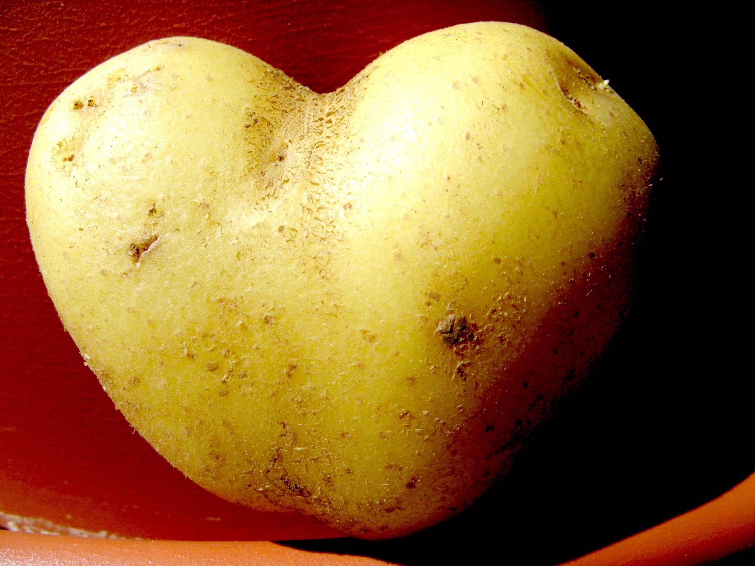 Kostenlose foto  Apfel Frucht Herz Lebensmittel produzieren