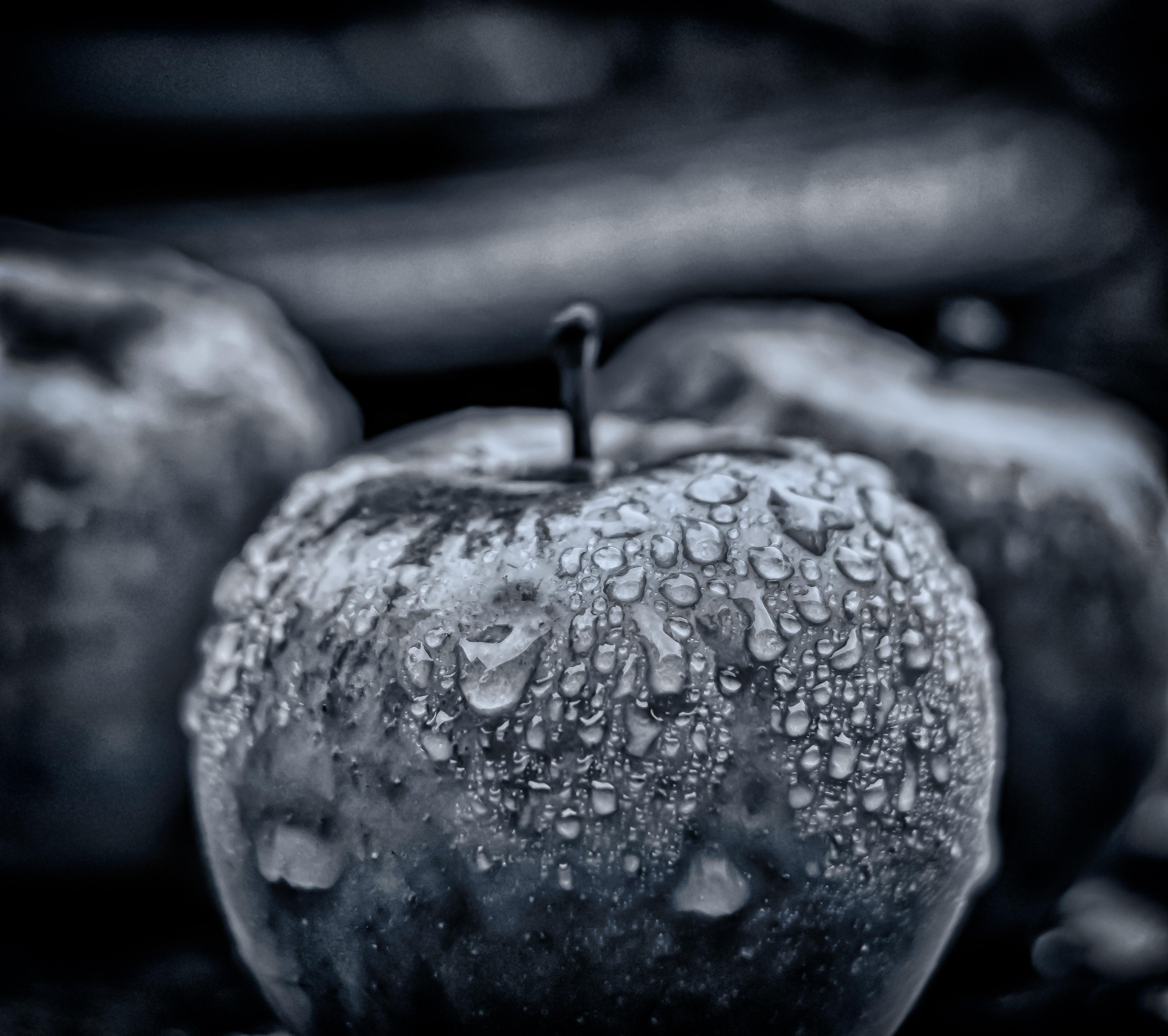 Images Gratuites Pomme Neige Hiver Noir Et Blanc