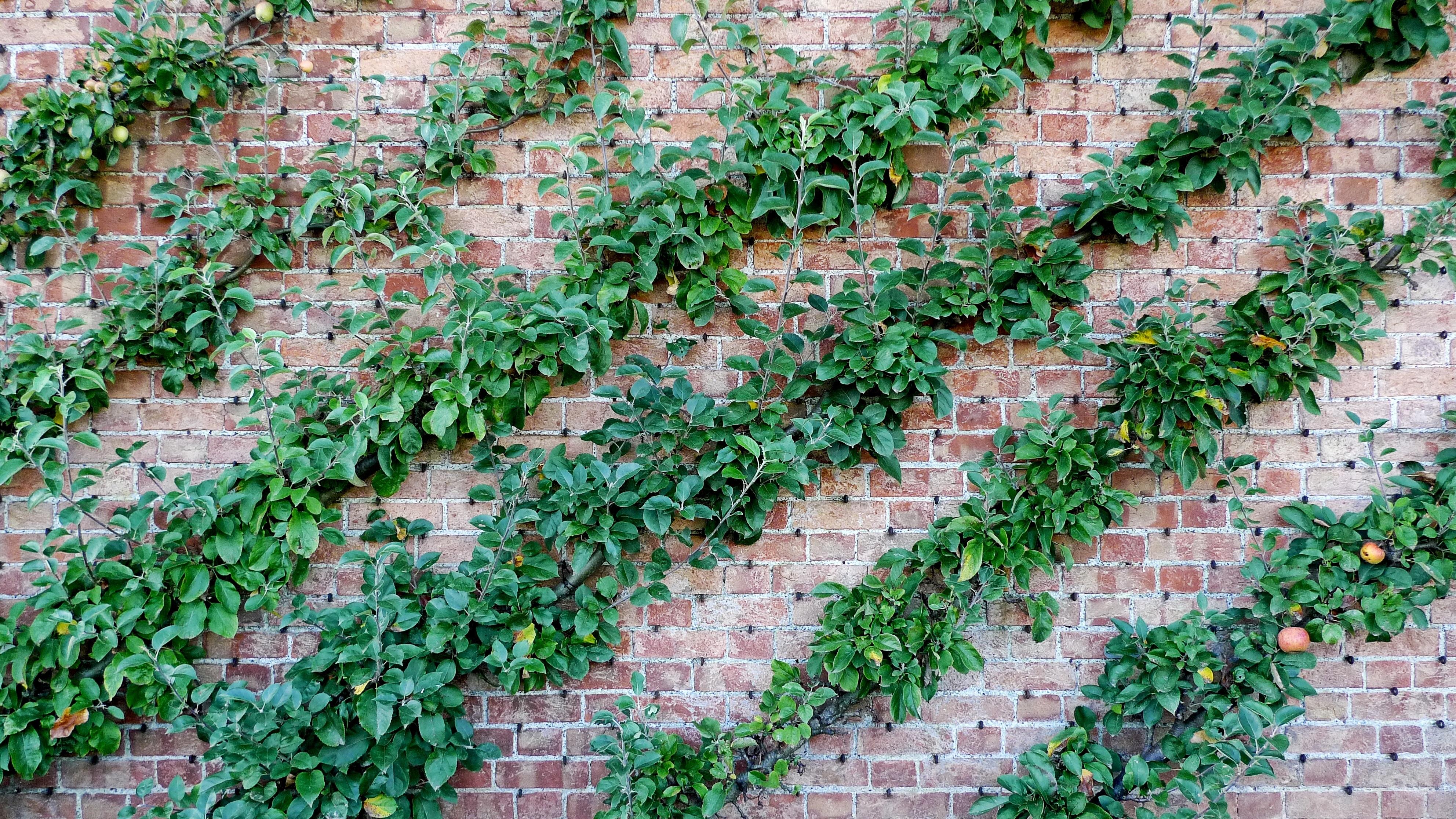 Gratis afbeeldingen appel boom gras tak fabriek rij for Opleiding tuin