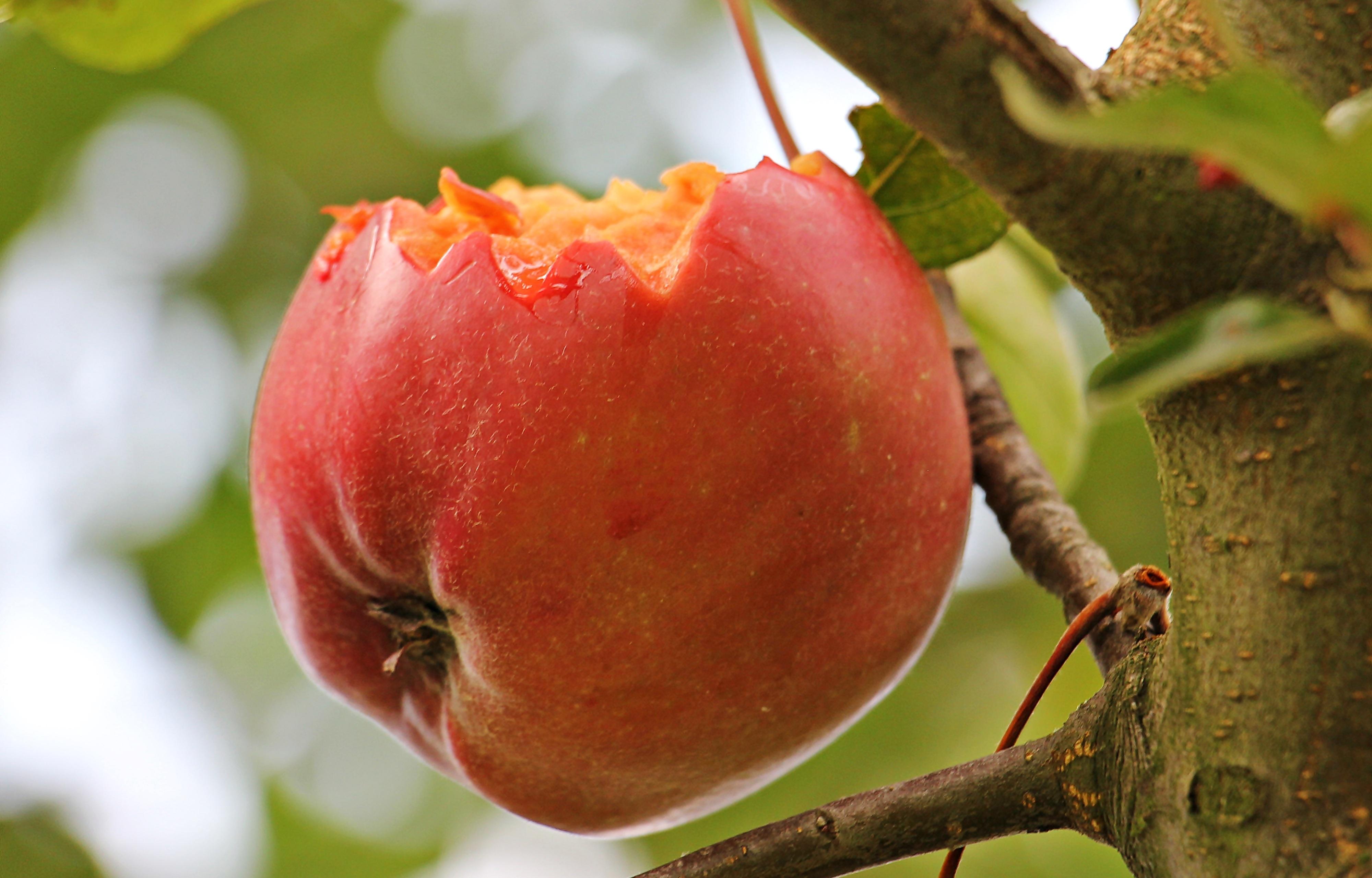 Спелые плоды картинки