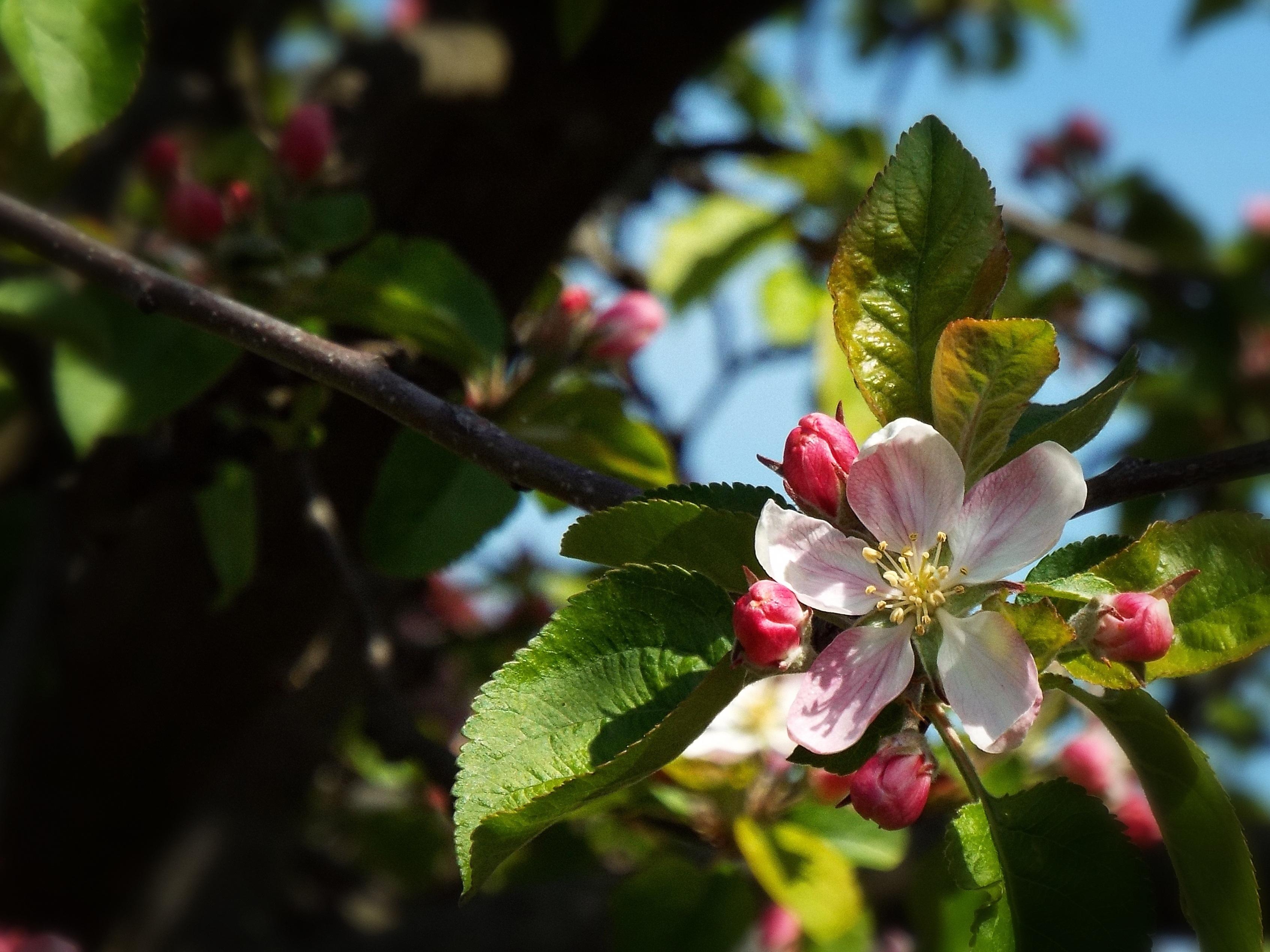 banco de imagens natureza ramo plantar fruta baga folha flor comida primavera produzir botnica jardim flora flores silvestres fecharse
