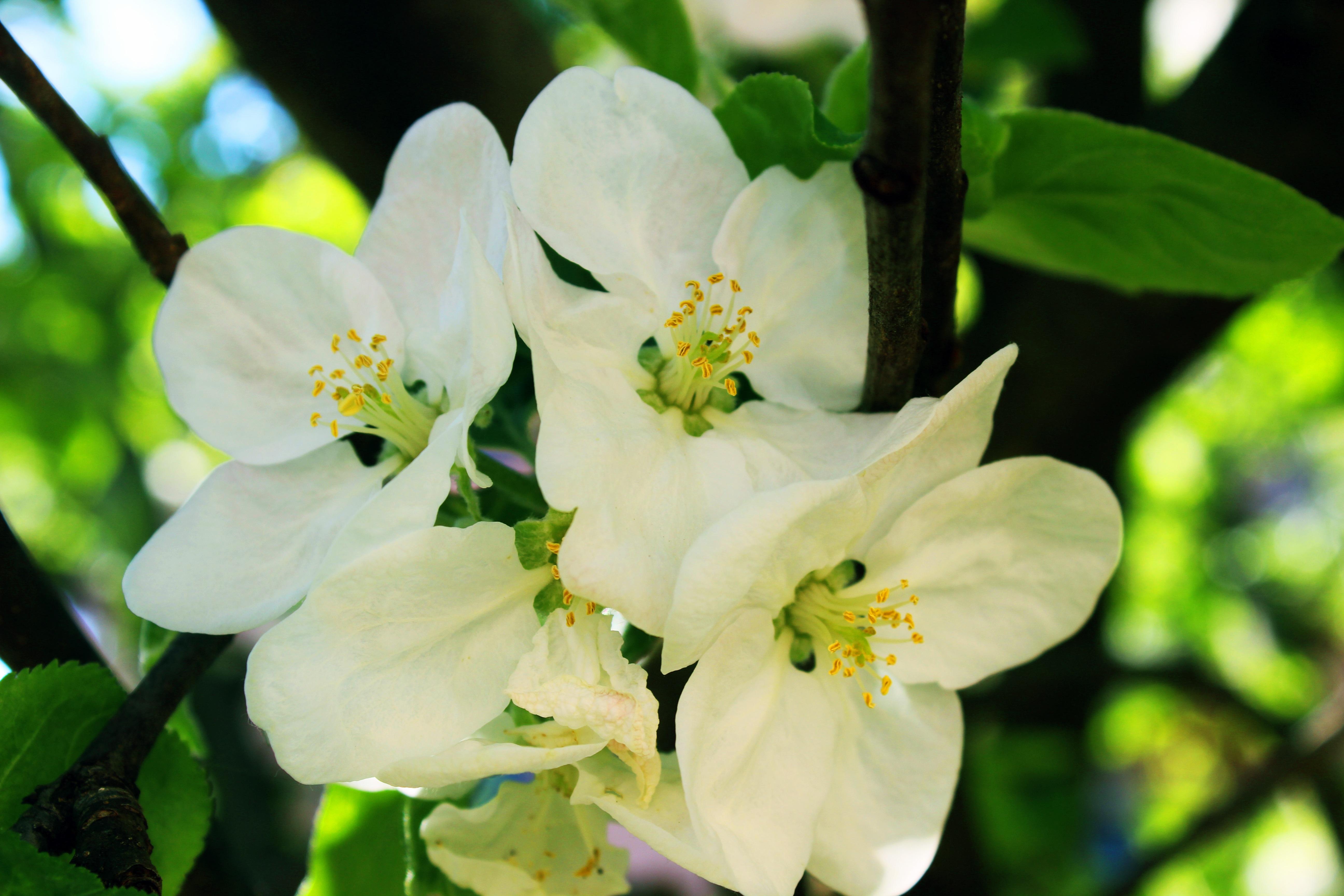 цветы яблоки листья картинки оттенков шоколад его