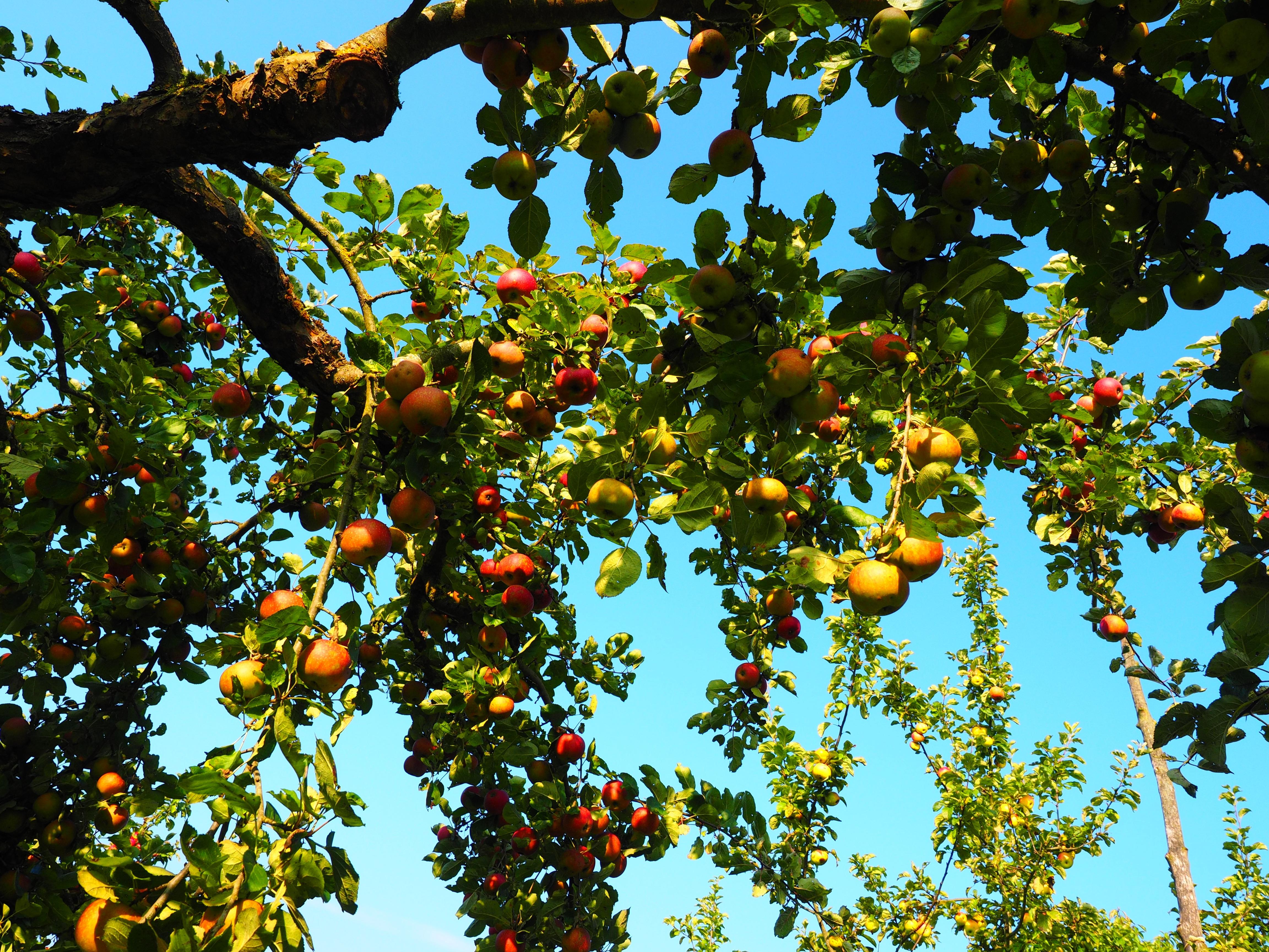 бумага картинка фруктового сада без фруктов мчс наградило