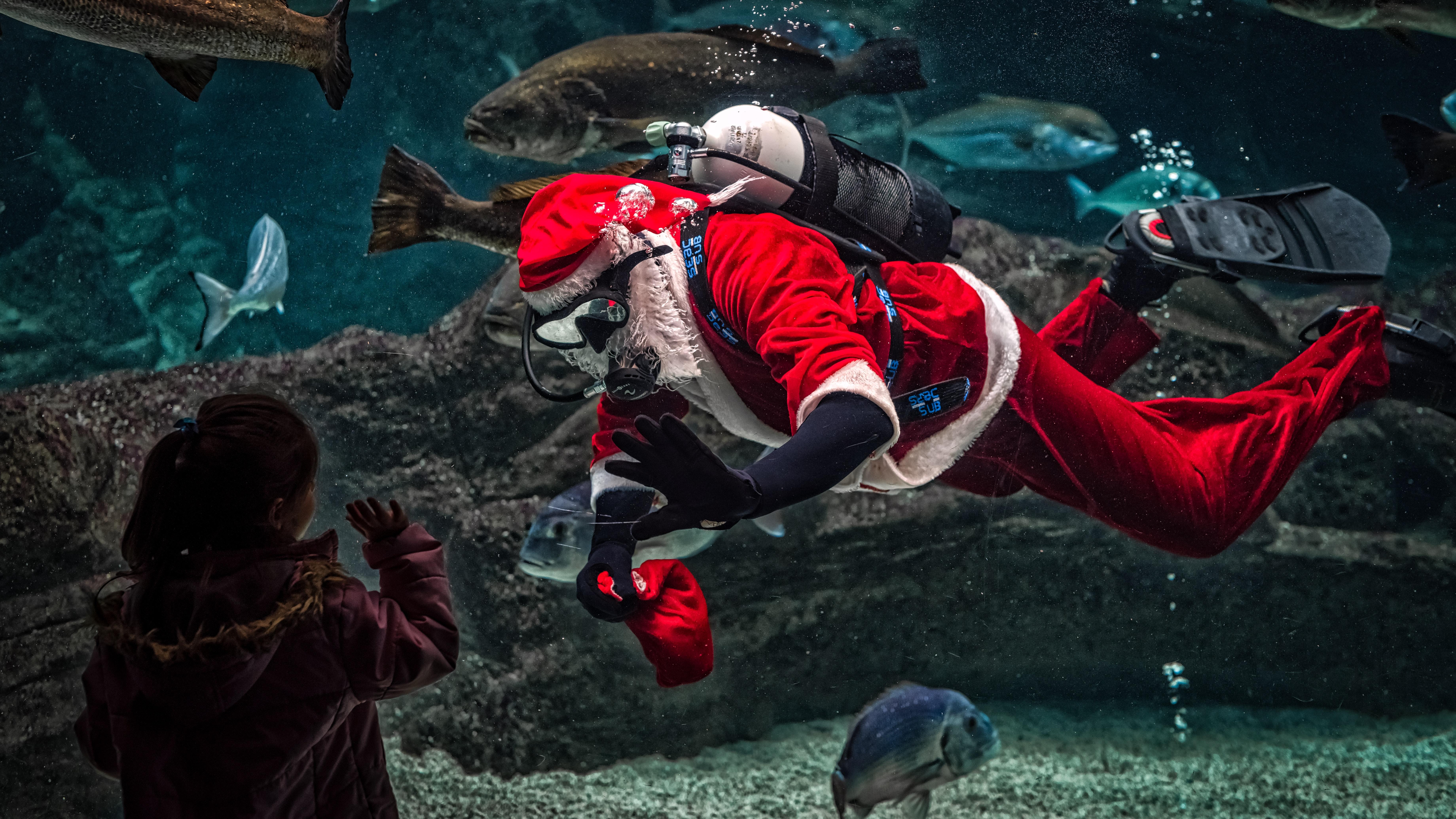 52117e05c akvárium dieťa zväčšenie kostýmy potápač ryby dievča dieťa málo muž pohyb  ľudia červená Mikuláš plávanie podvodná