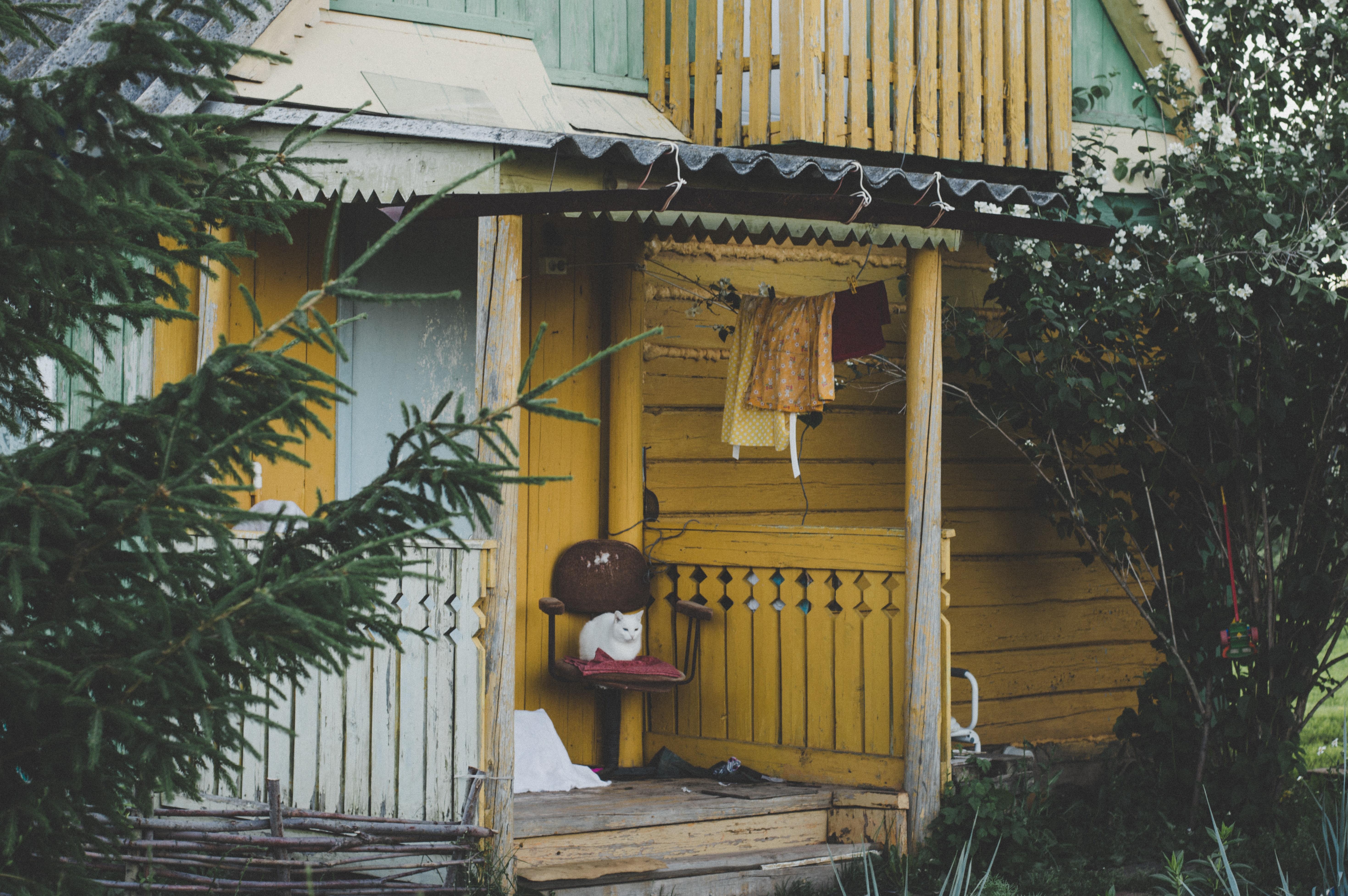 Houten Stoel Tuin : Gratis afbeeldingen : architectuur bungalow kat stoel daglicht