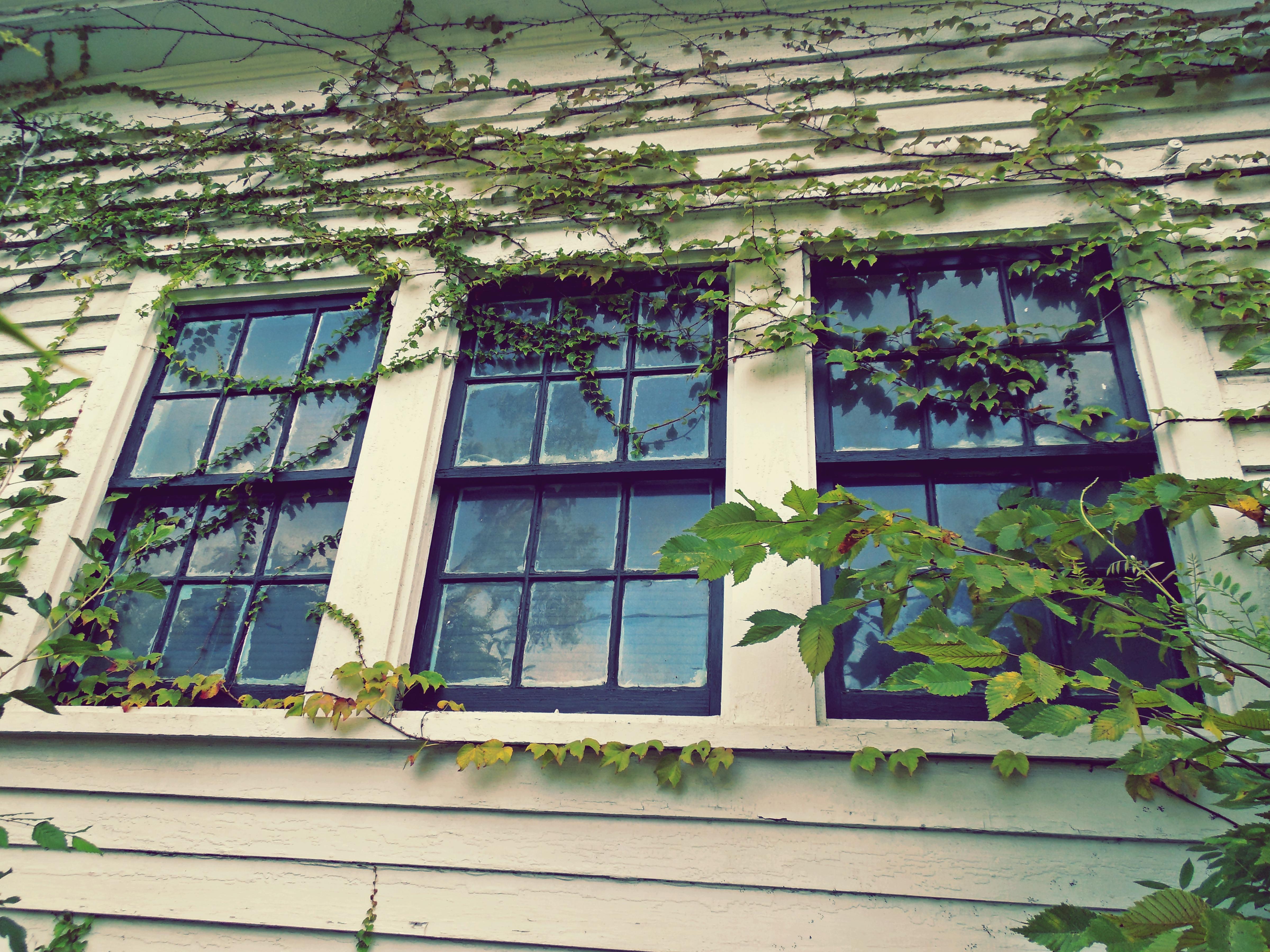 Gratis billeder : arkitektur, hus, vindue, glas, tag, hjem, væg ...