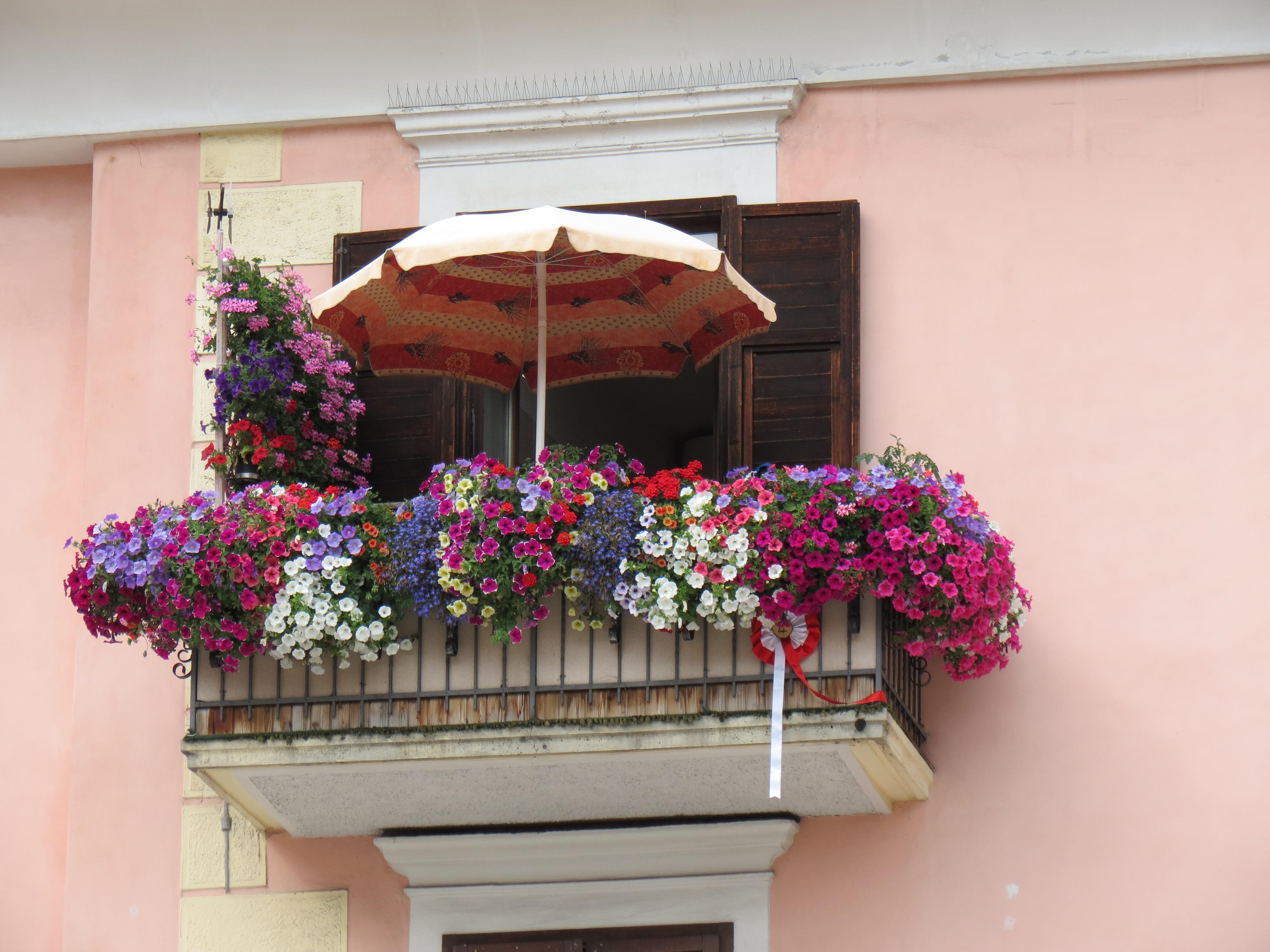 Gratis billeder : arkitektur, plante, blomst, vindue, altan ...