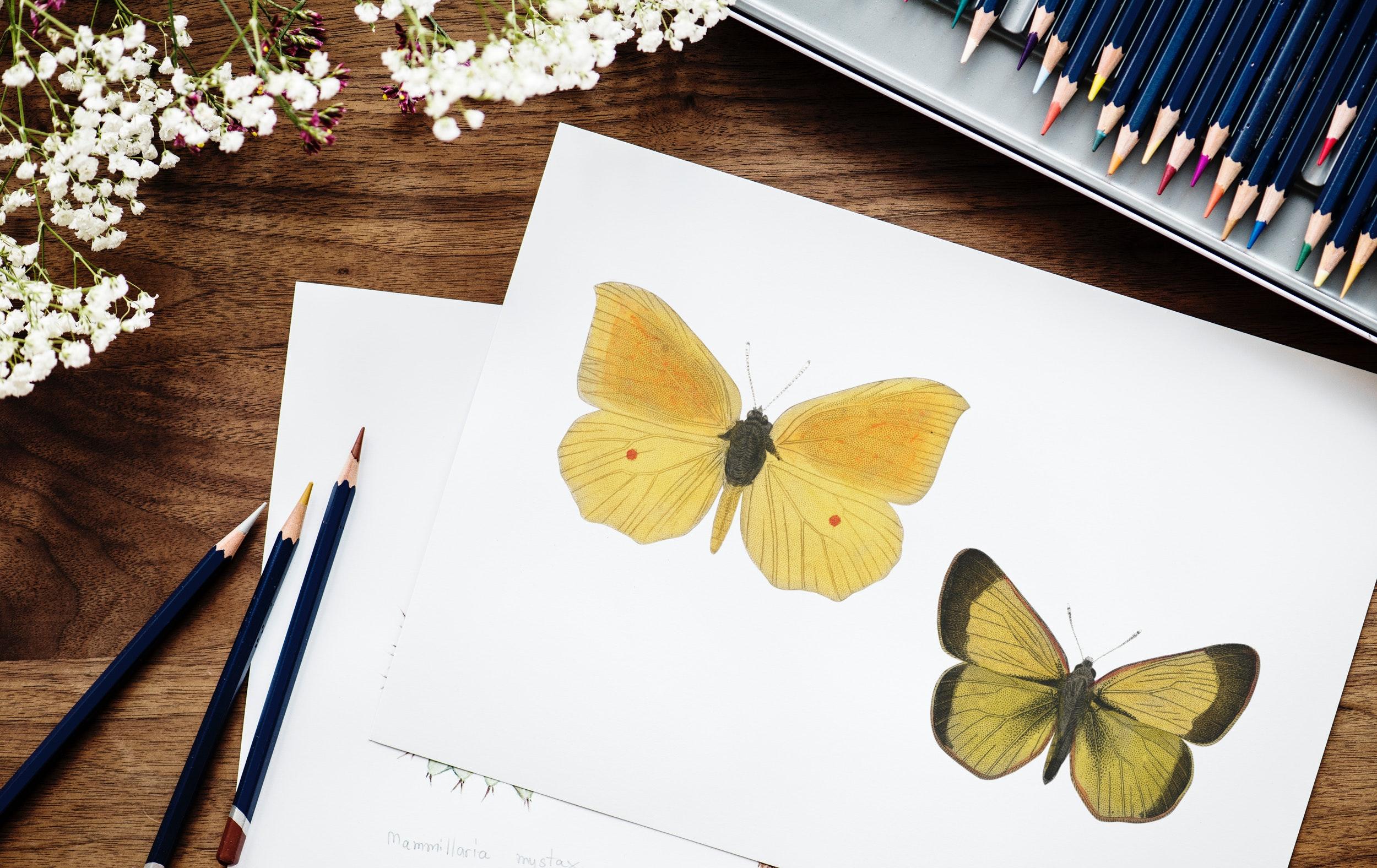 Fotos Gratis Art Mariposas Colorante Lapices De Colores
