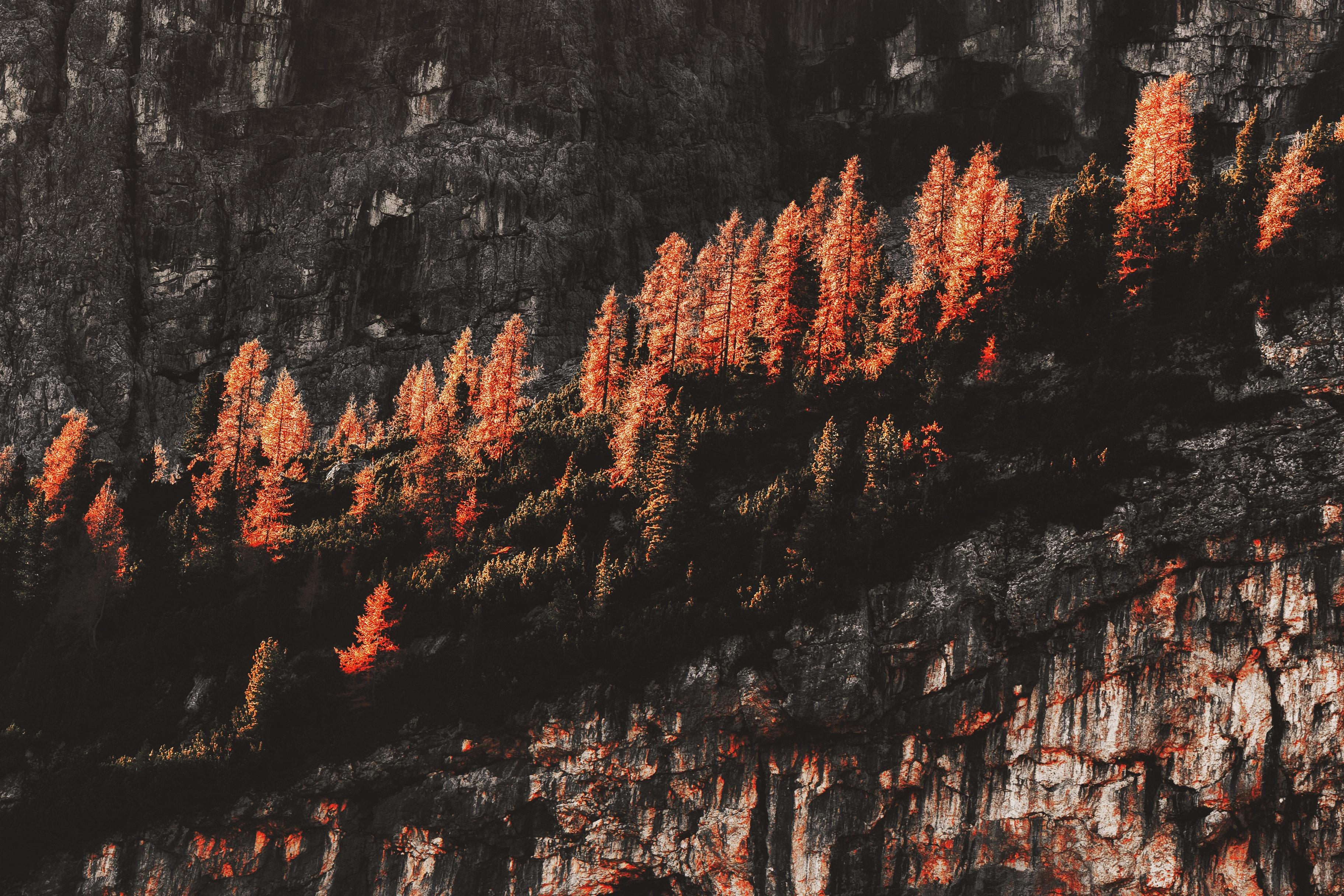 Free Images Autumn Colours Color Conifer Daylight
