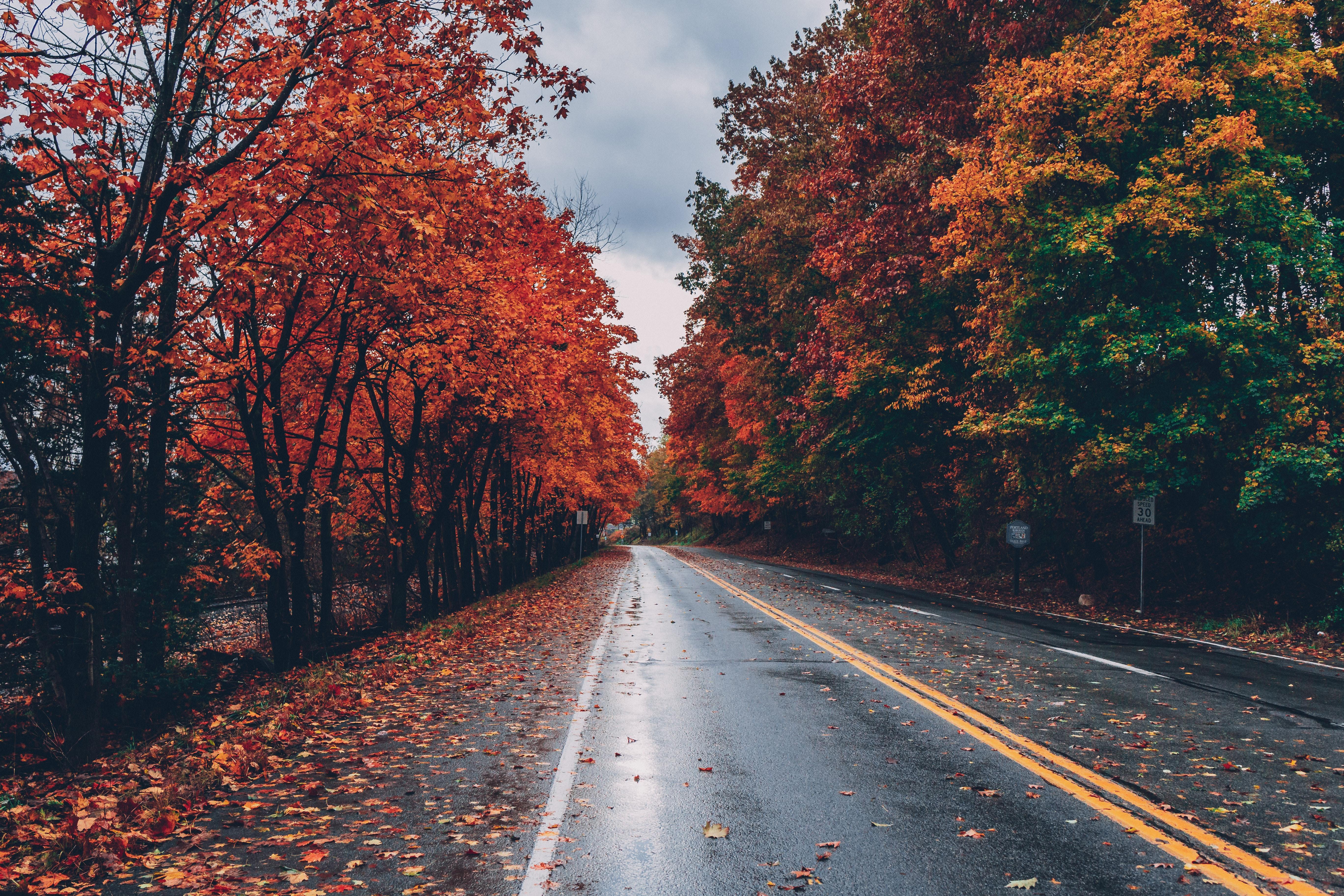 Free Images Autumn Leaves Fall Colors Fall Foliage