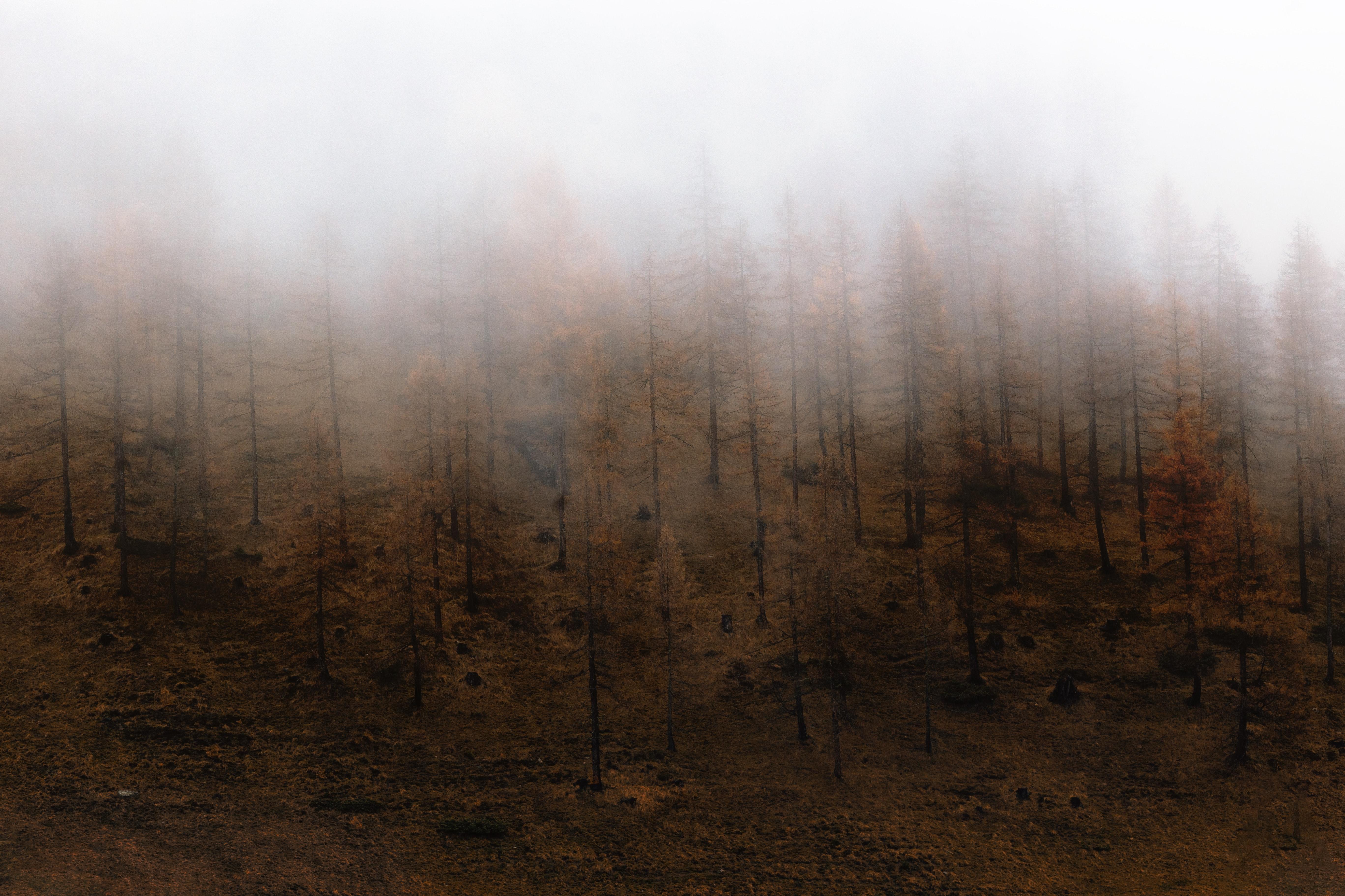 Fotoğraf Sonbahar Masaüstü Arka Planları Düşmek Sis Sisli
