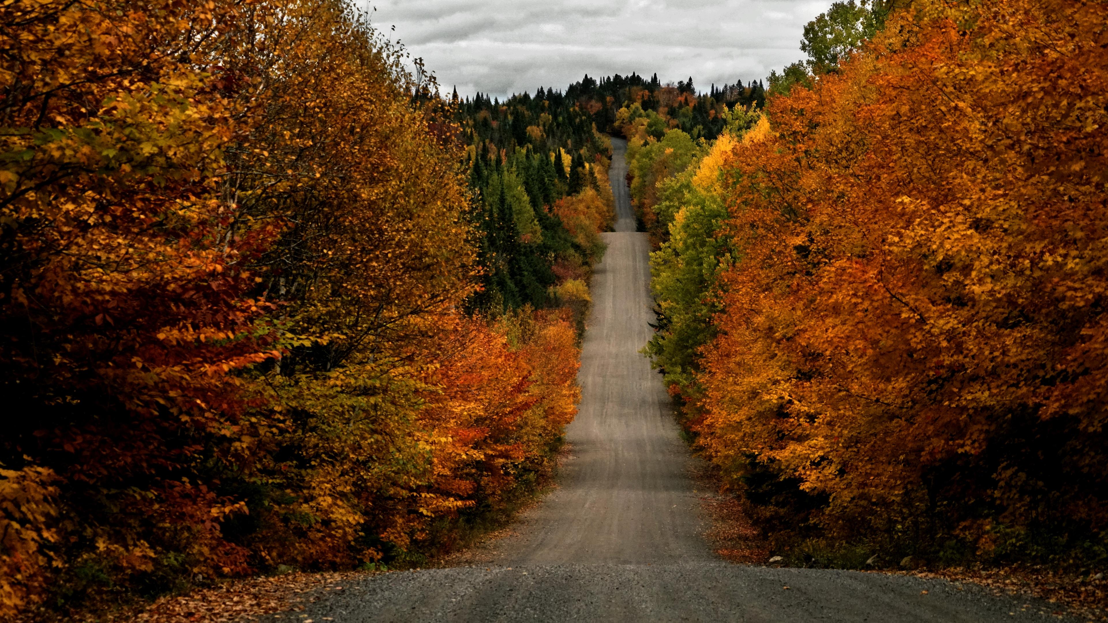 無料画像 秋 カナダ ケベック州 木 色 森林 自然 パス 道路