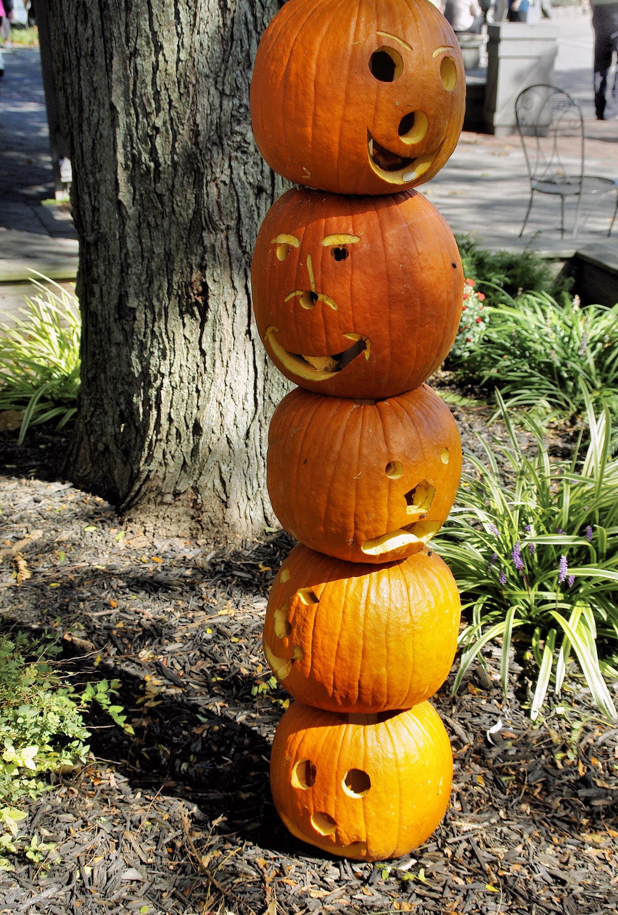 Free Images : autumn, pumpkin, halloween, usa, holiday, yellow ...