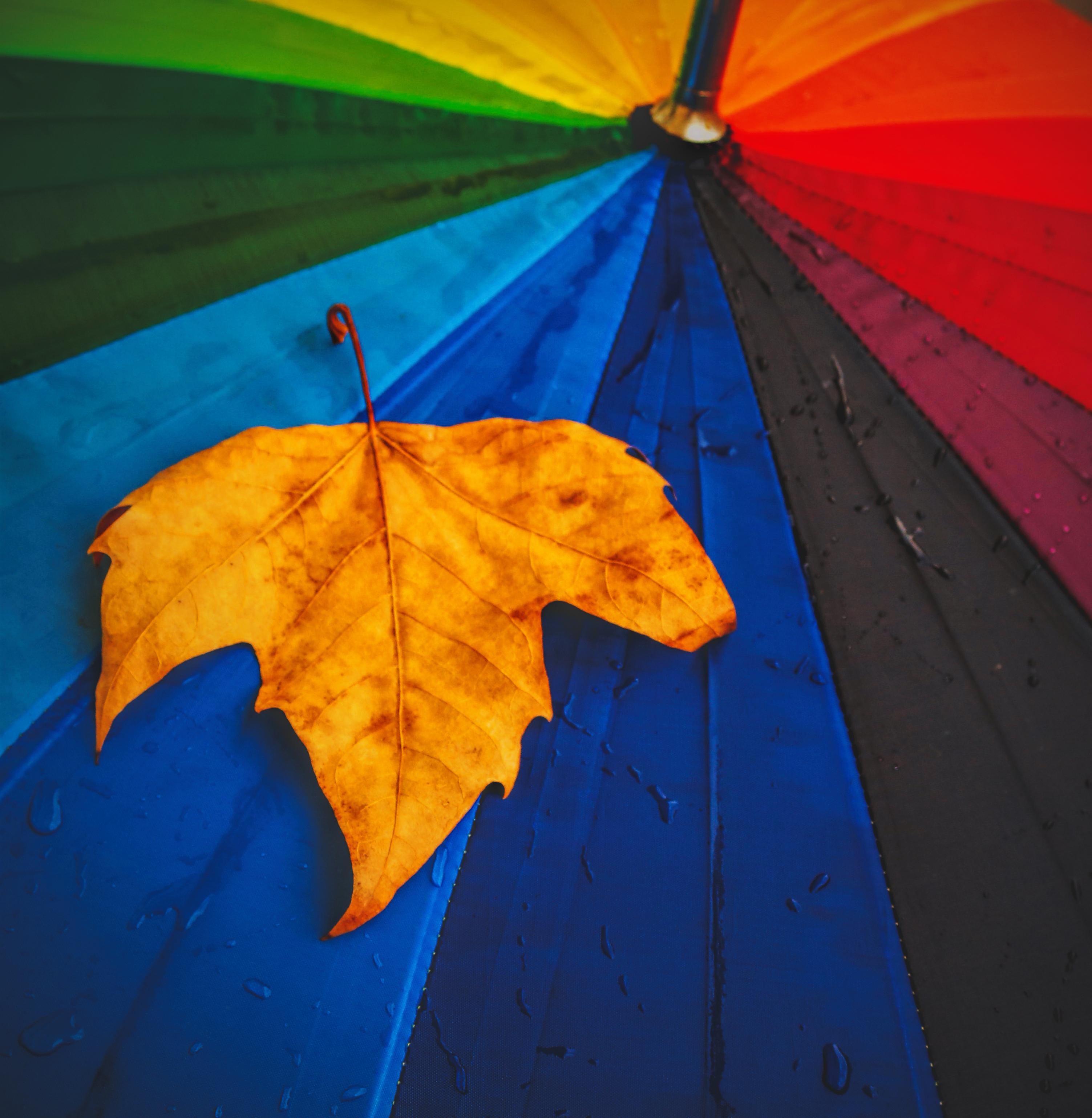 autumn rain leaf yellow maple leaf umbrella sky tree computer wallpaper plant 1453485