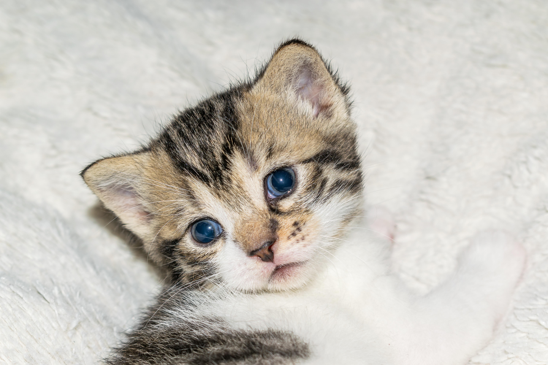 Images gratuites b b chat b b chat chaton mignonne doux jeune chat attention adidas - Photo de bebe chat ...
