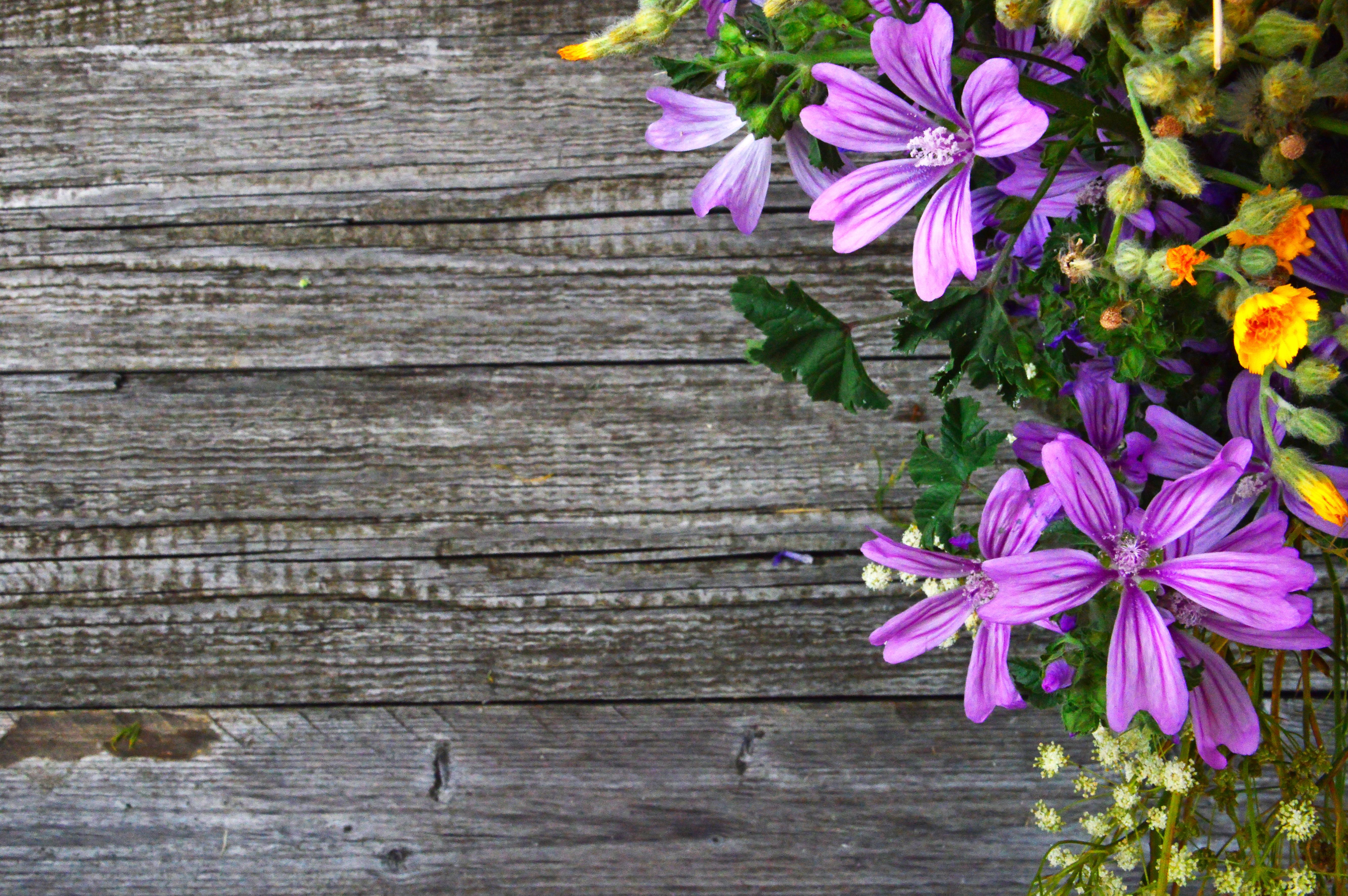 Poze Fundal Frumoasa Frumuseţe Buchet Culoare Colorat