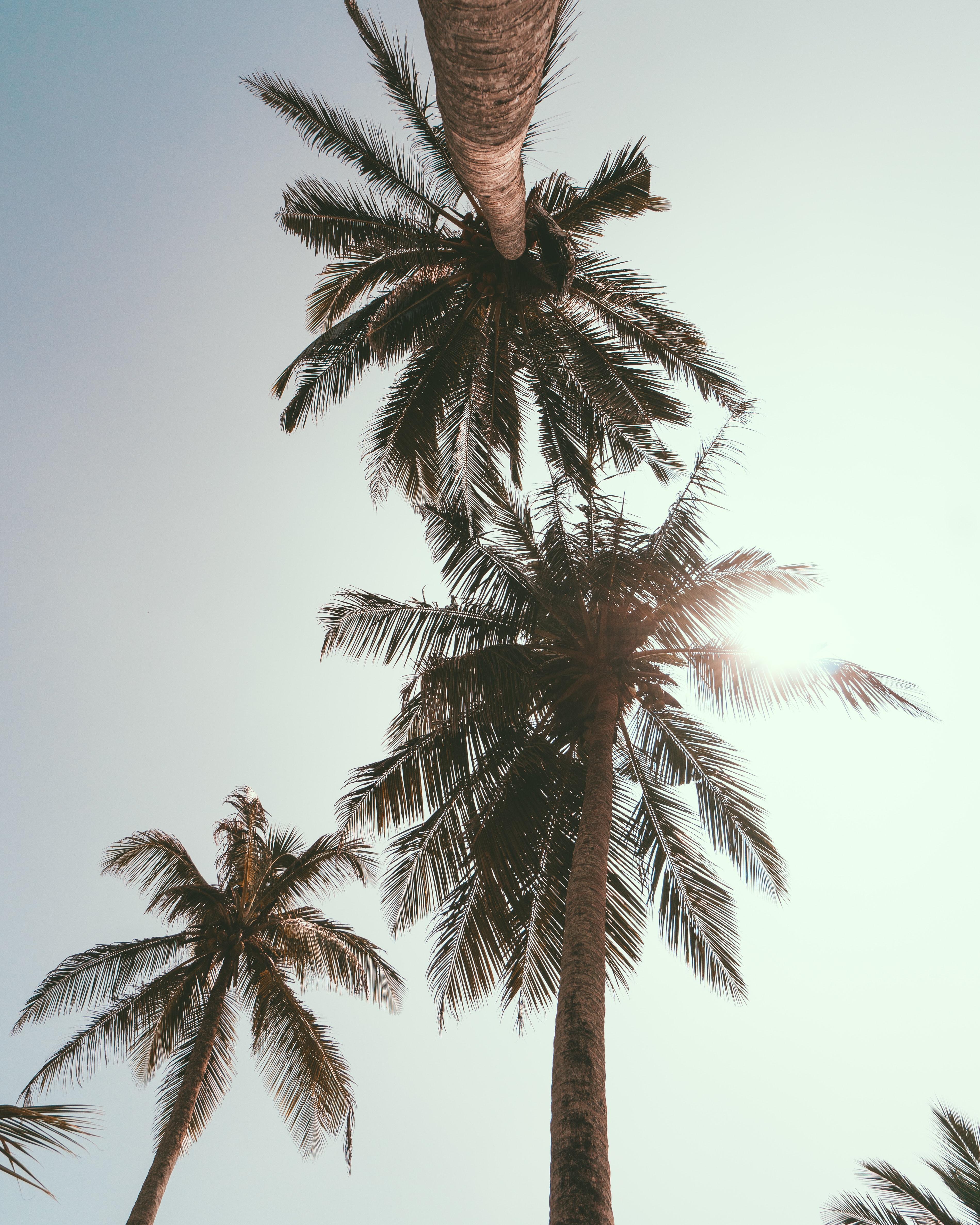 dating palvelut auringon paiste rannikolla Hayden Moss kat edorsson dating
